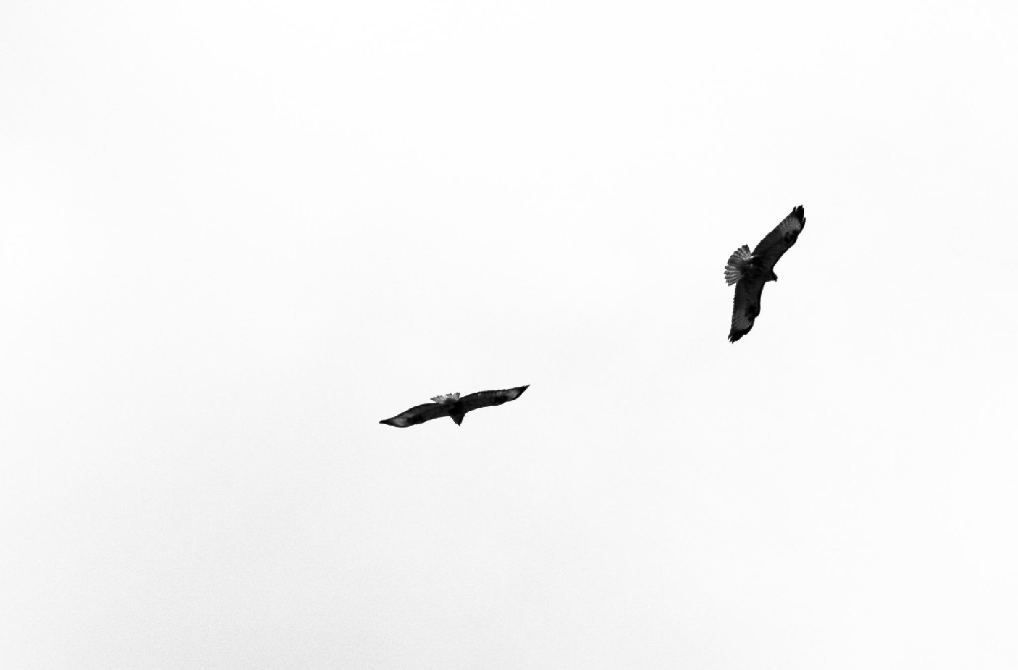 Untitled by Mahmut YILDIRICI