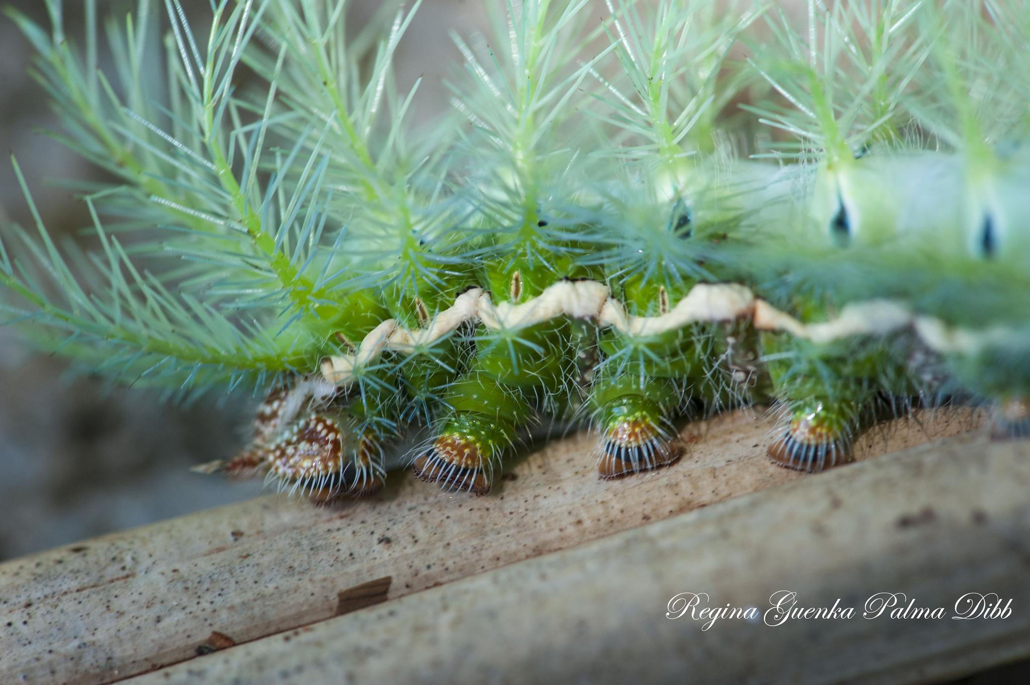 green caterpillar by Regina Guenka Palma-Dibb