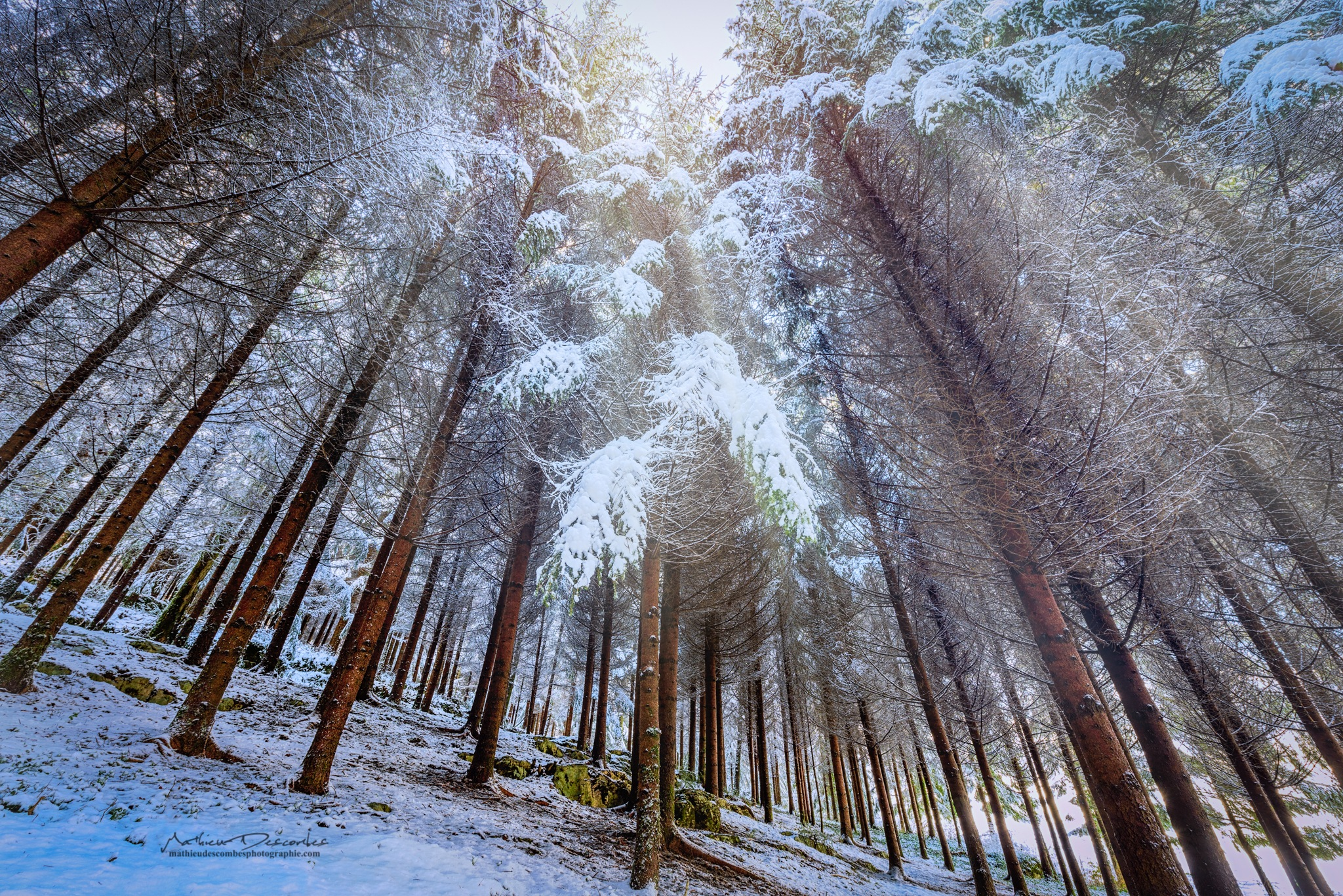 Forest by Mathieu Descombes Photographie
