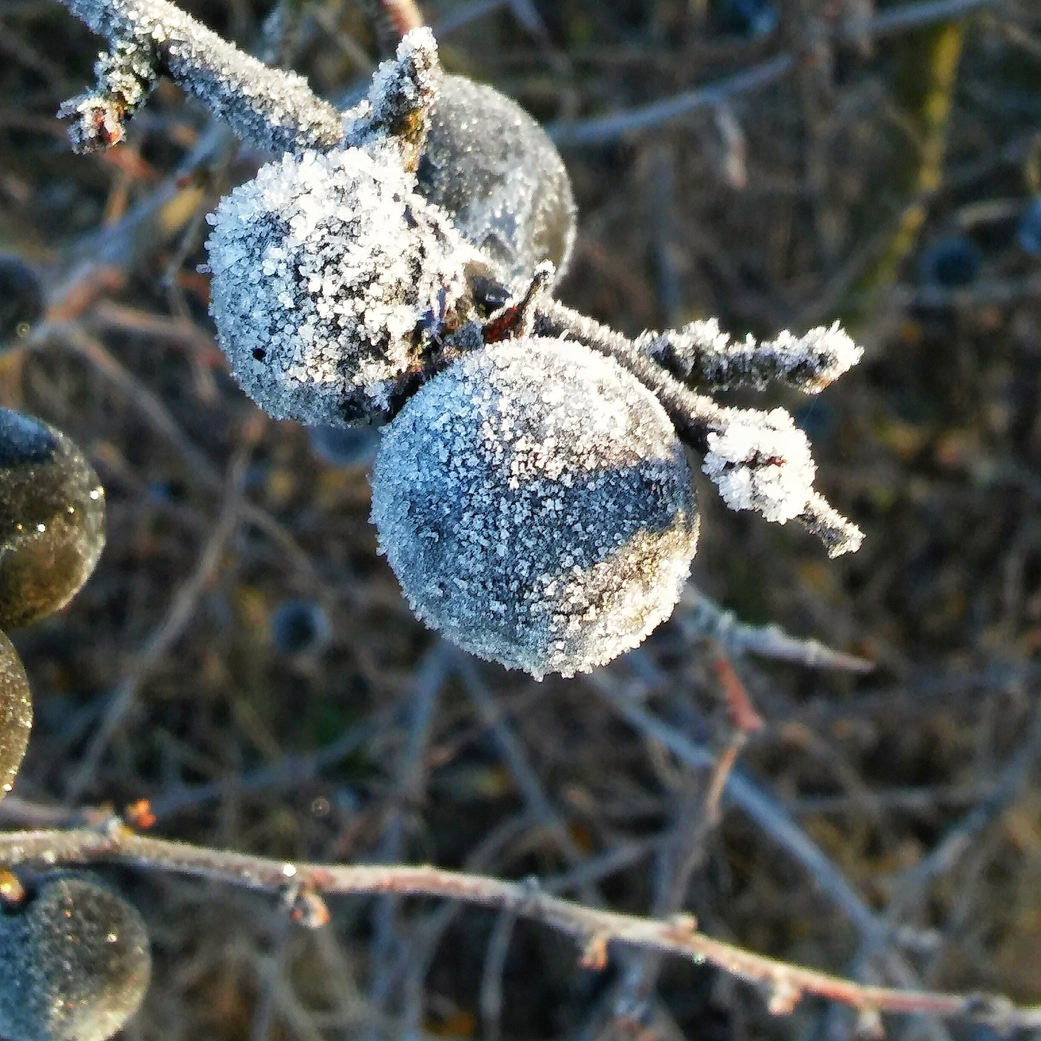 frosted sloe by Heike  Block