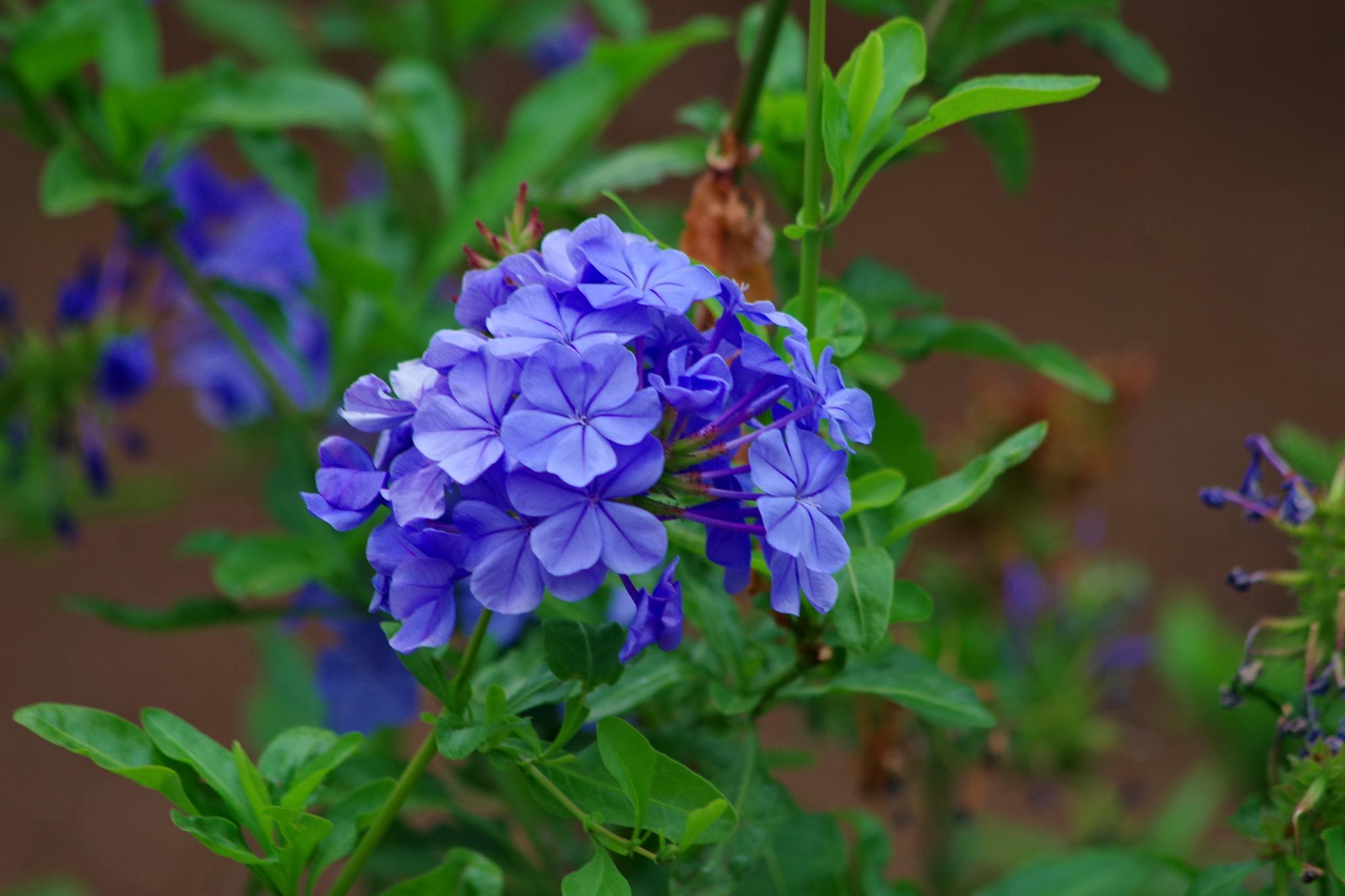 always blooming... by Heike  Block