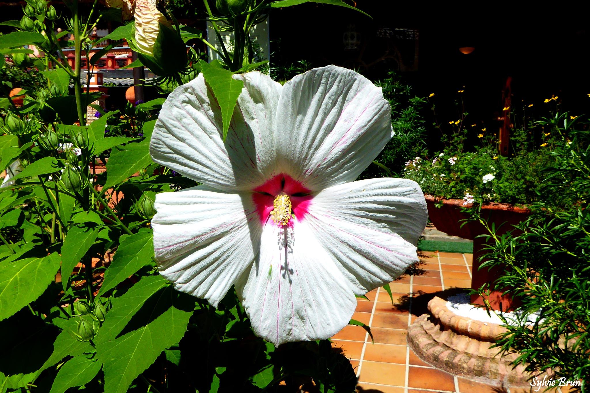 Hibiscus de 40 cm de diamètre by Newsyl