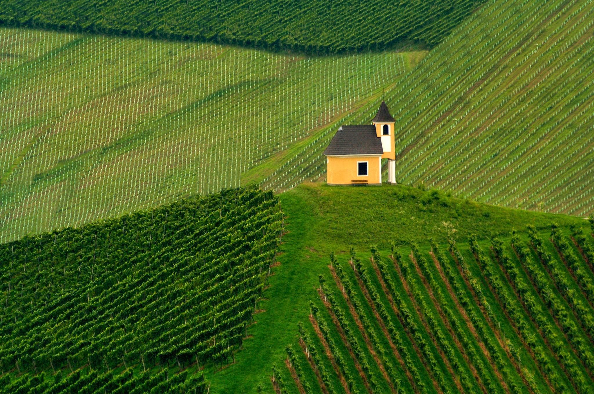 Vineyards by Jure Kravanja