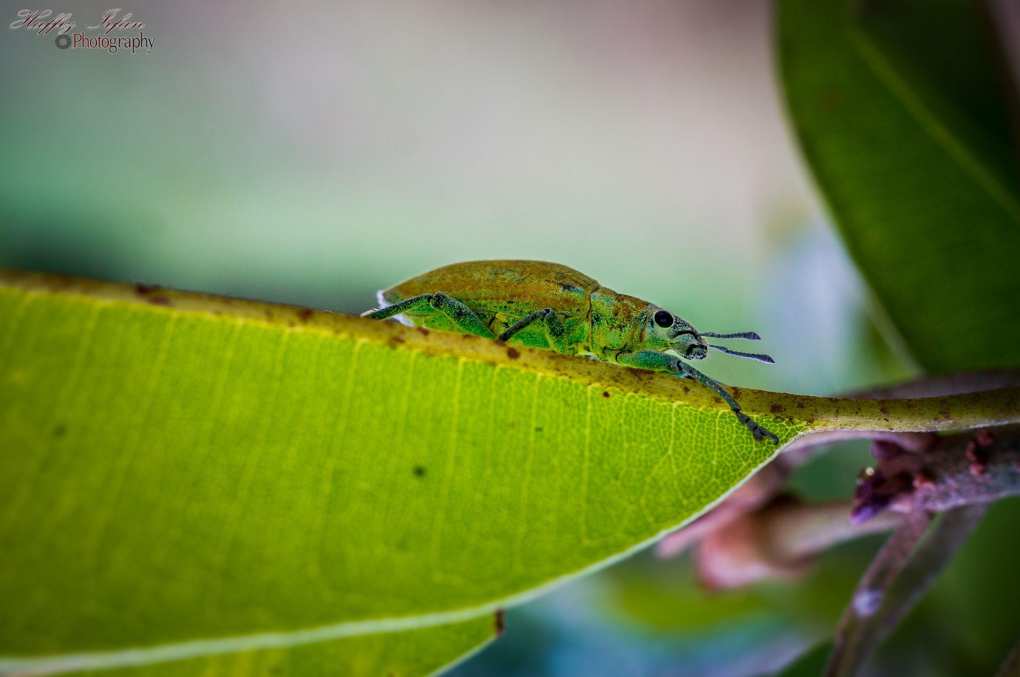 Bug chillin. by Haffiz Irfan