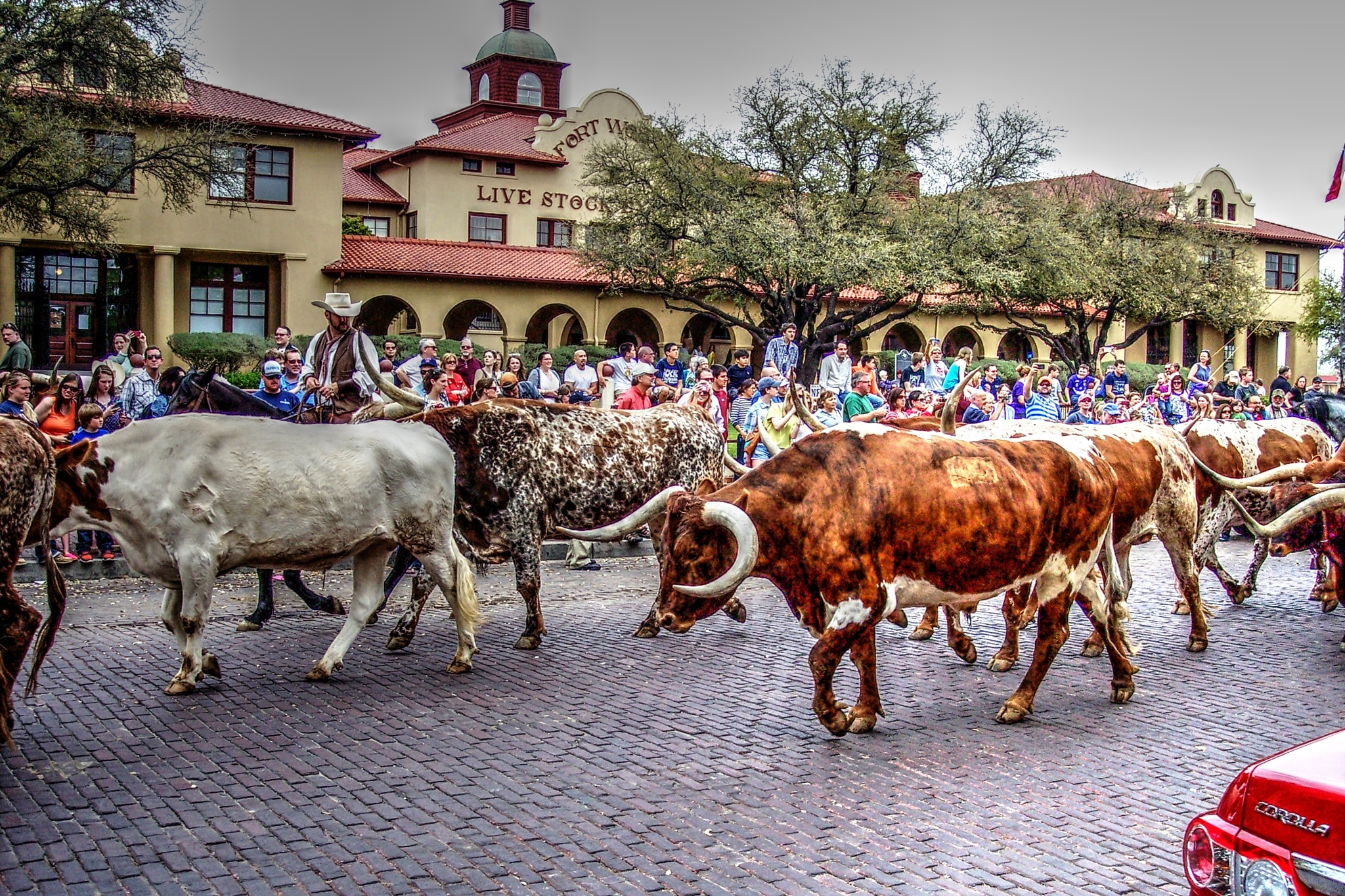 Ft. Worth Texas by Jaime Cantu