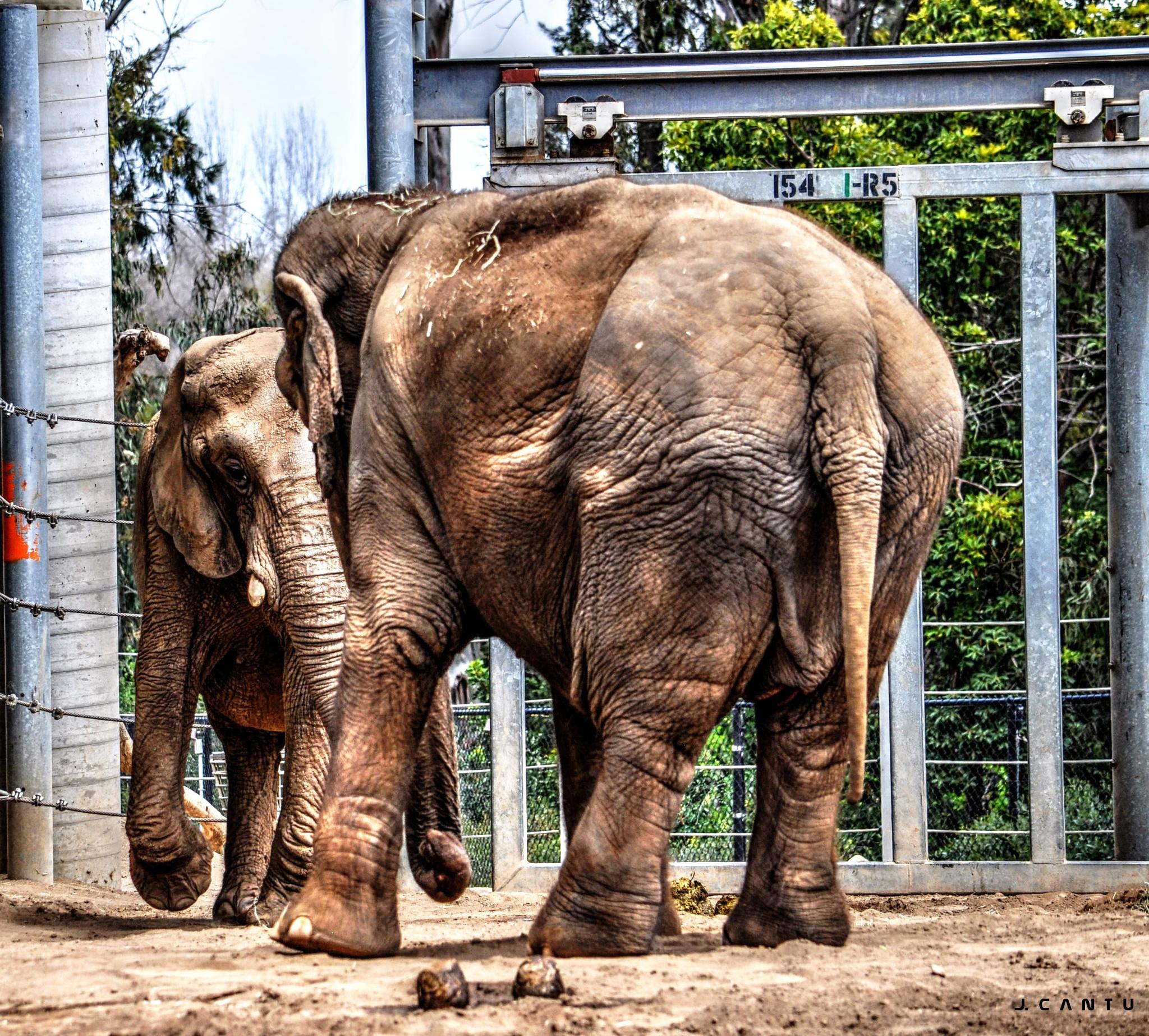 2 Elephant's Walk Into A bar..................... by Jaime Cantu