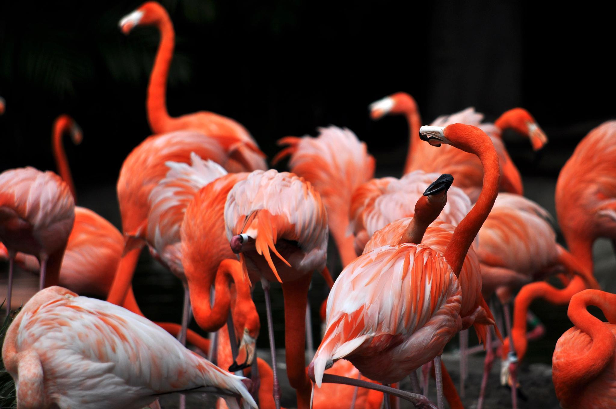 Flamingo Party !!!! by Jaime Cantu