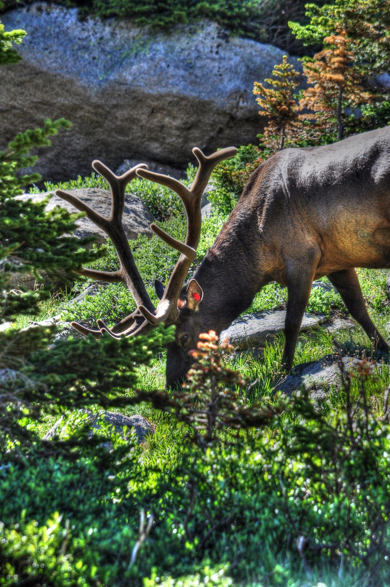 Oh Deer 2 !! by Jaime Cantu