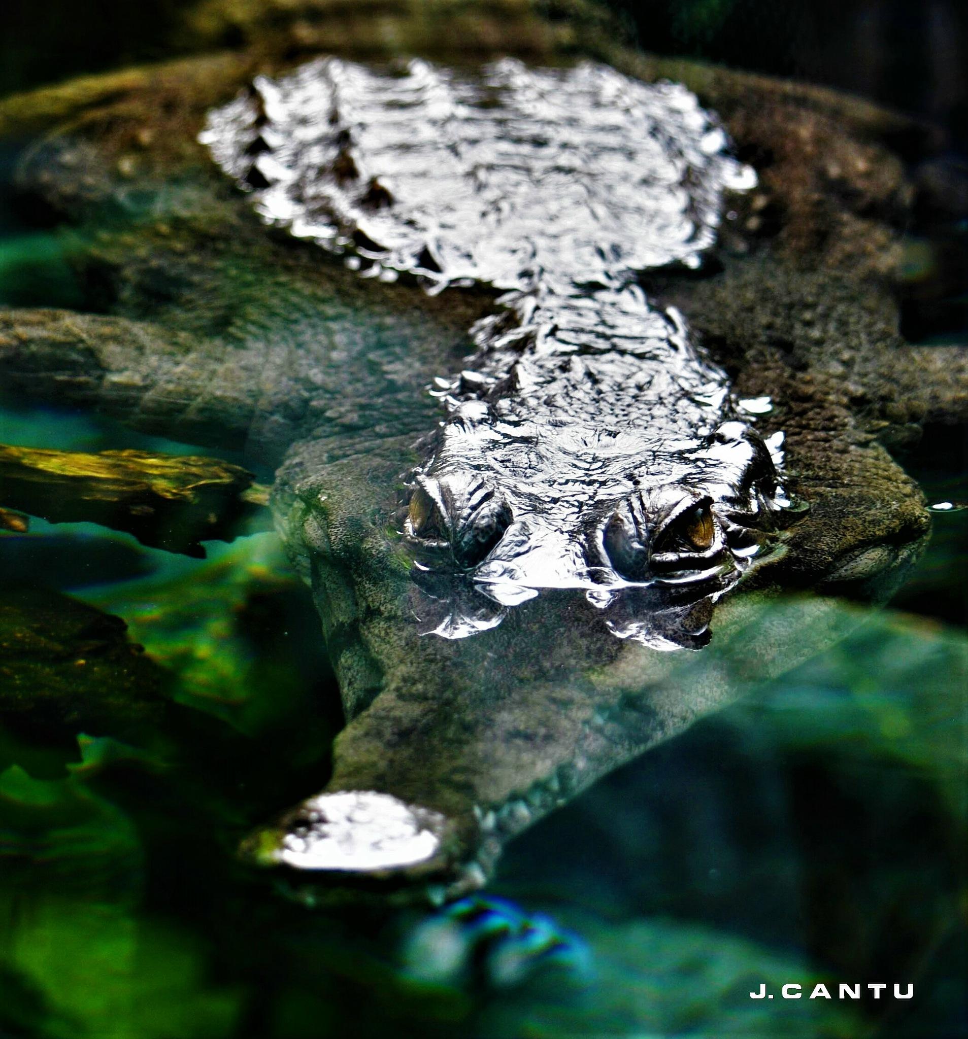 I See U........................................ by Jaime Cantu