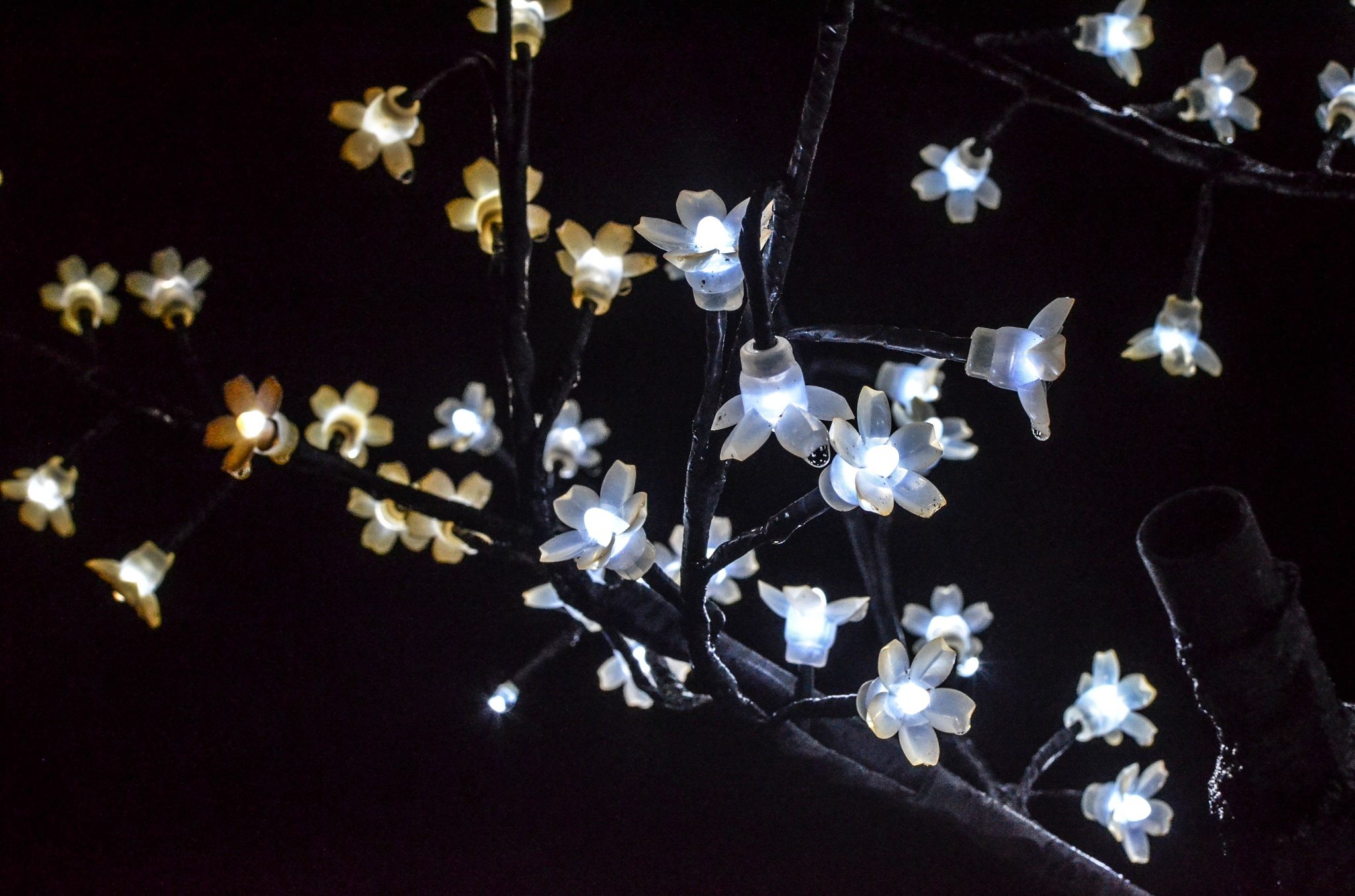 Tree Lights by Carlene Hall