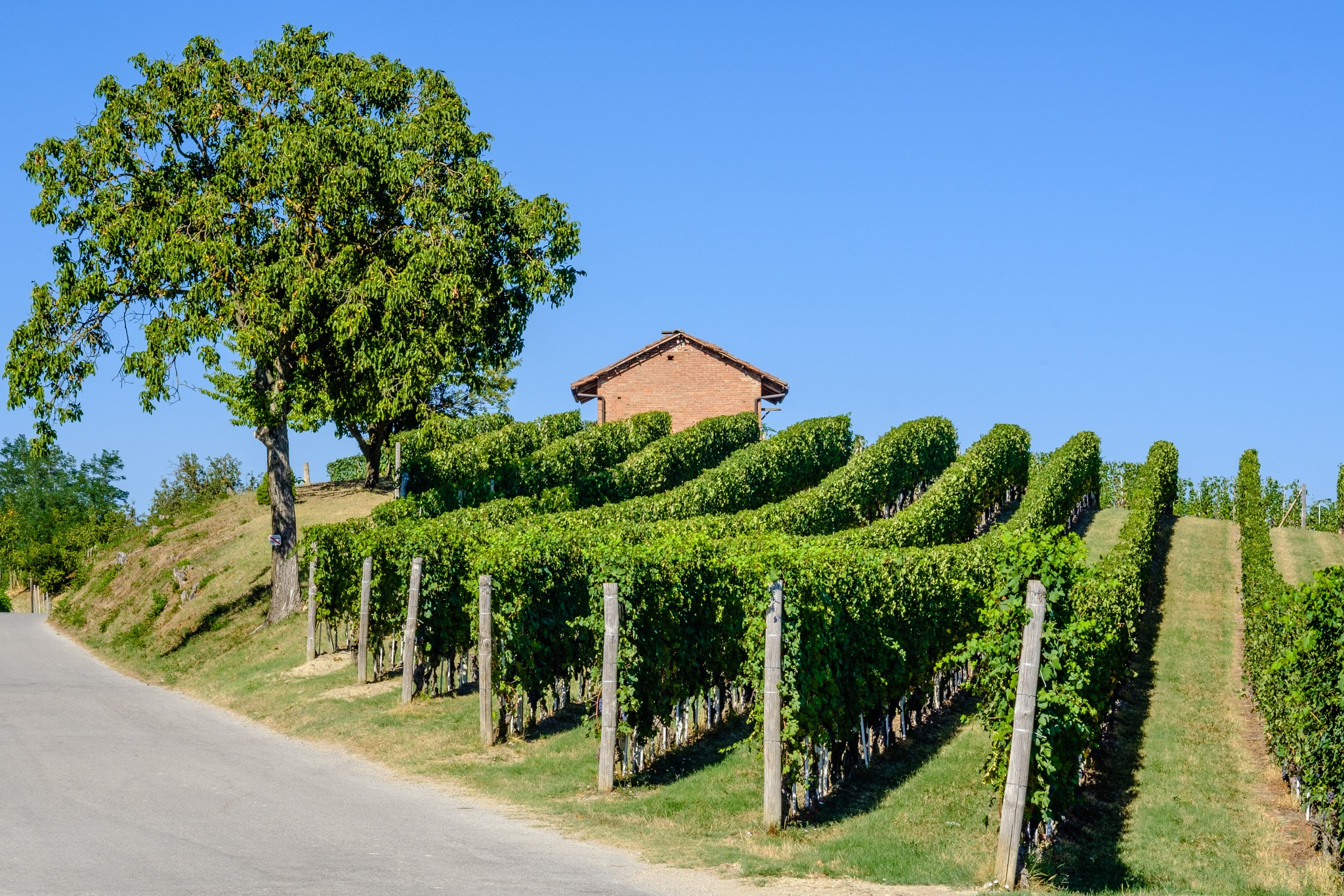 The house between the grapevines by FrancescoPala