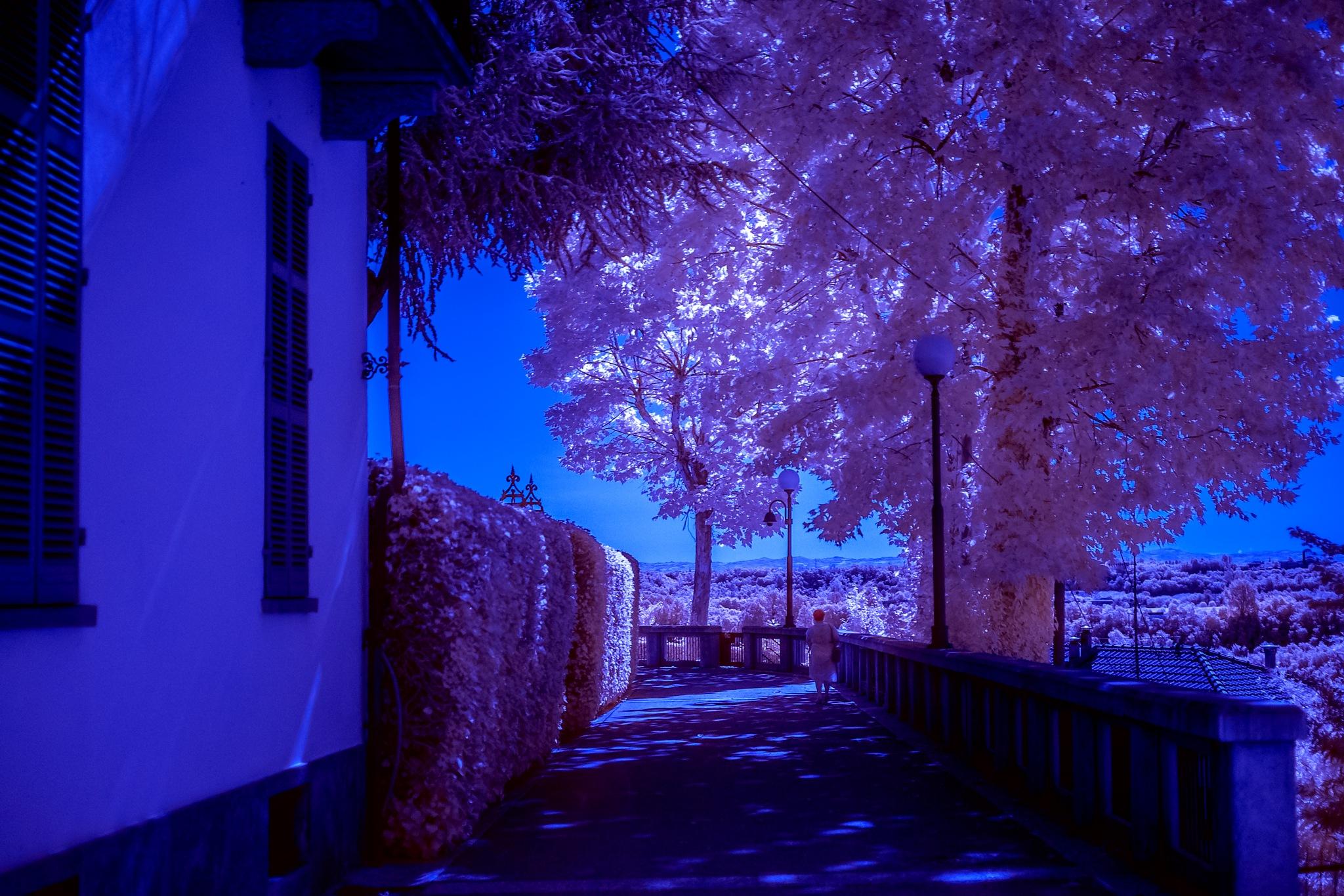 Pink by FrancescoPala