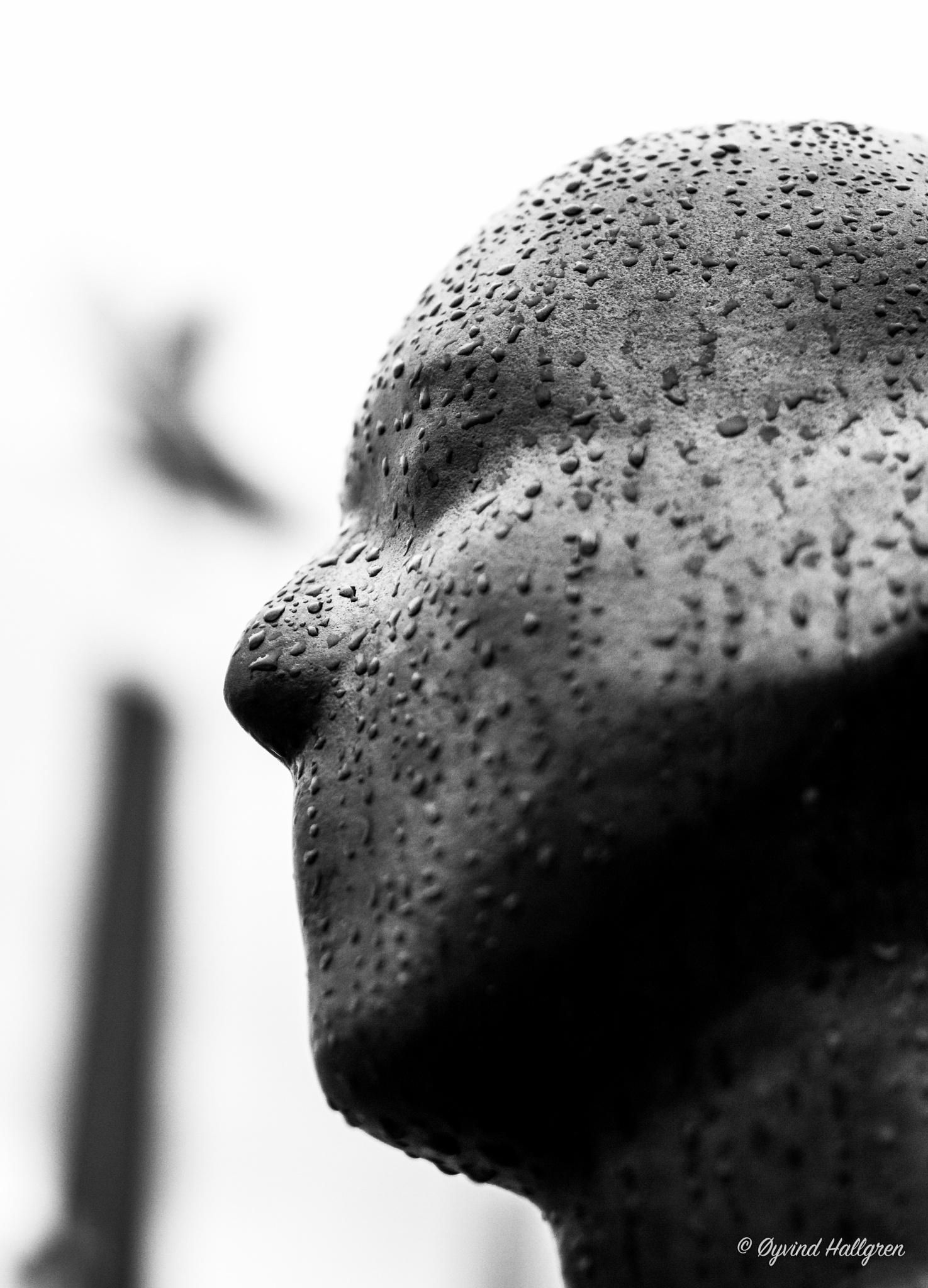 Rainman by Hallgren