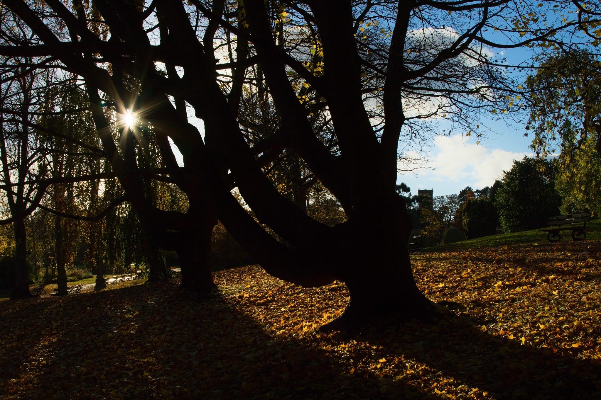Autumn Sunburst. by Steven Gill
