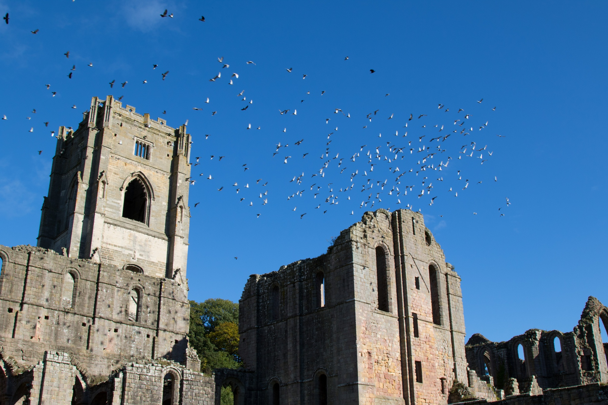 Fountains Abbey Tower. by Steve Gill