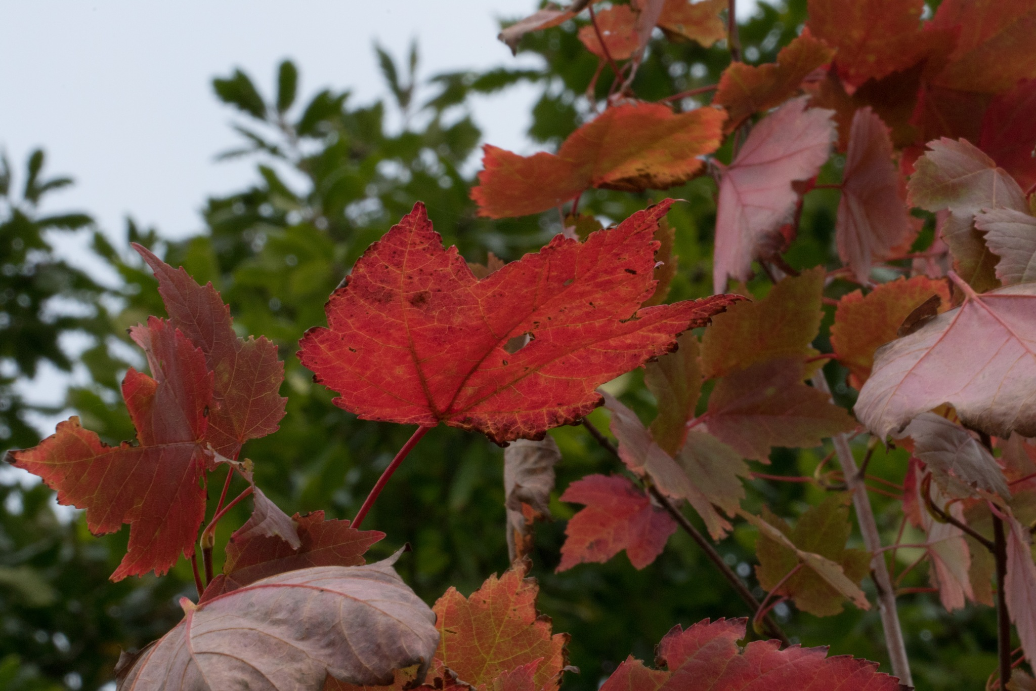 Red September. by Steve Gill