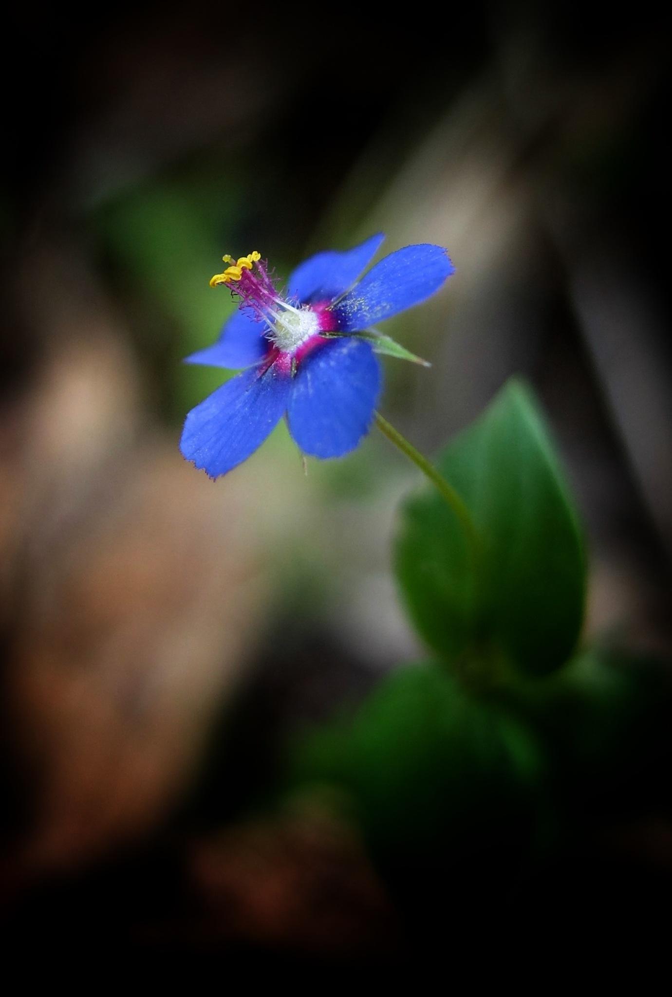 Spring  by TC Funda Sertdemir