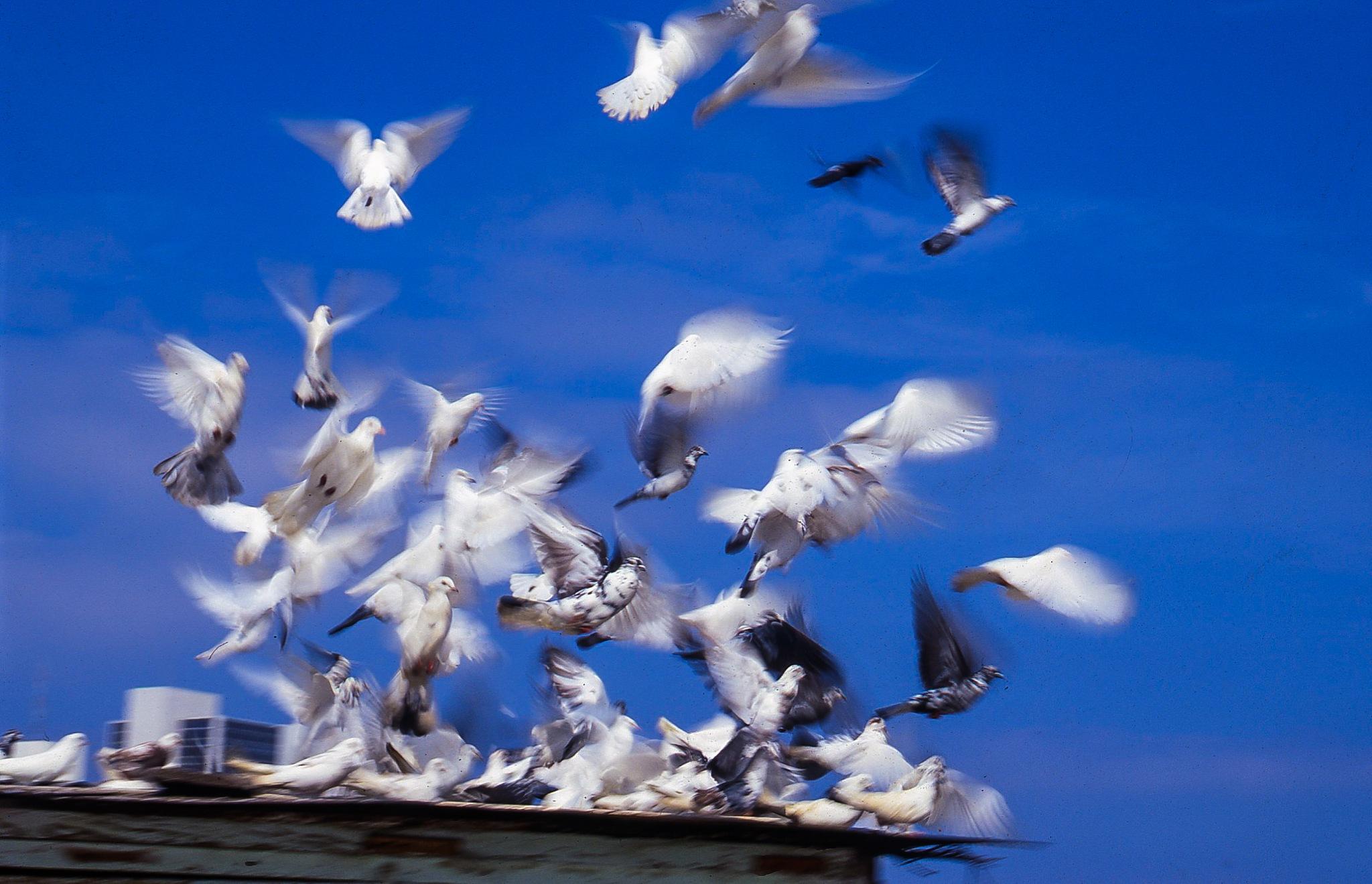 Heavenly Flight by Ron Stollman