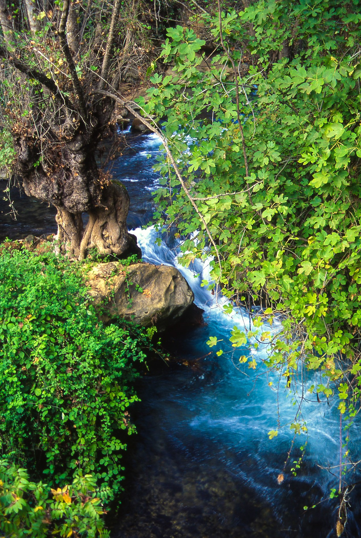 Stream by the Tree by Ron Stollman