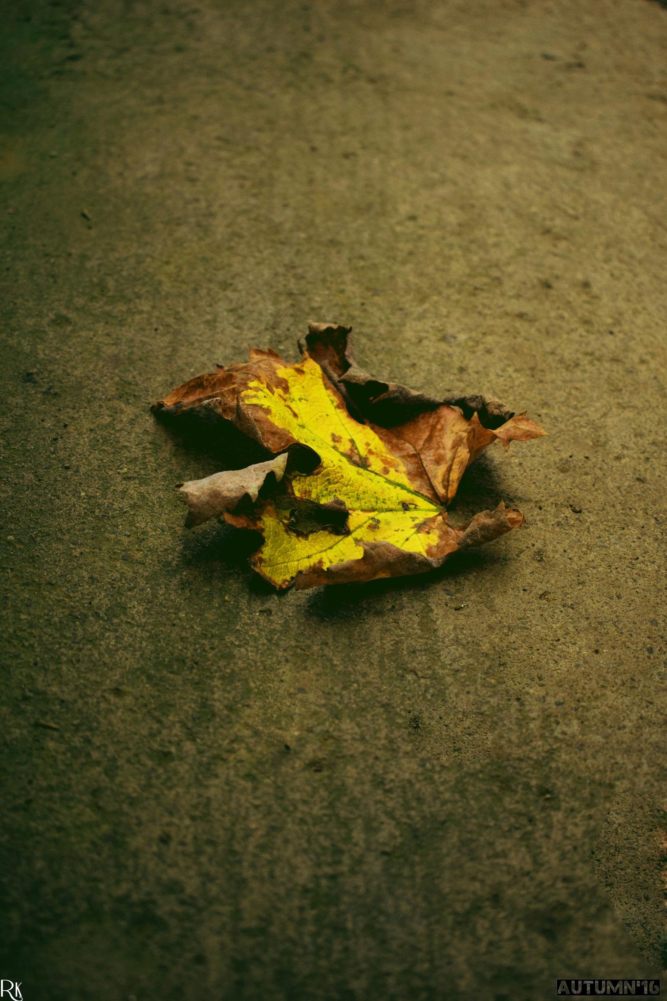 Welcome Autumn'16 @autumn2016 by Robert Krstevski