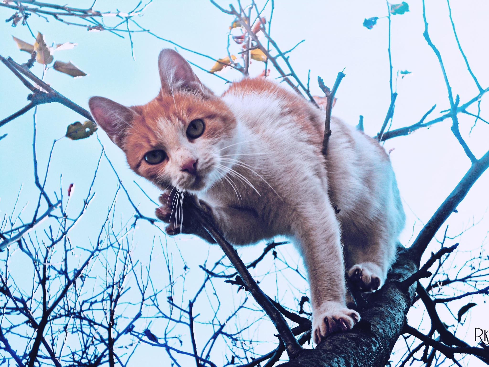 Cat @catedition6 by Robert Krstevski