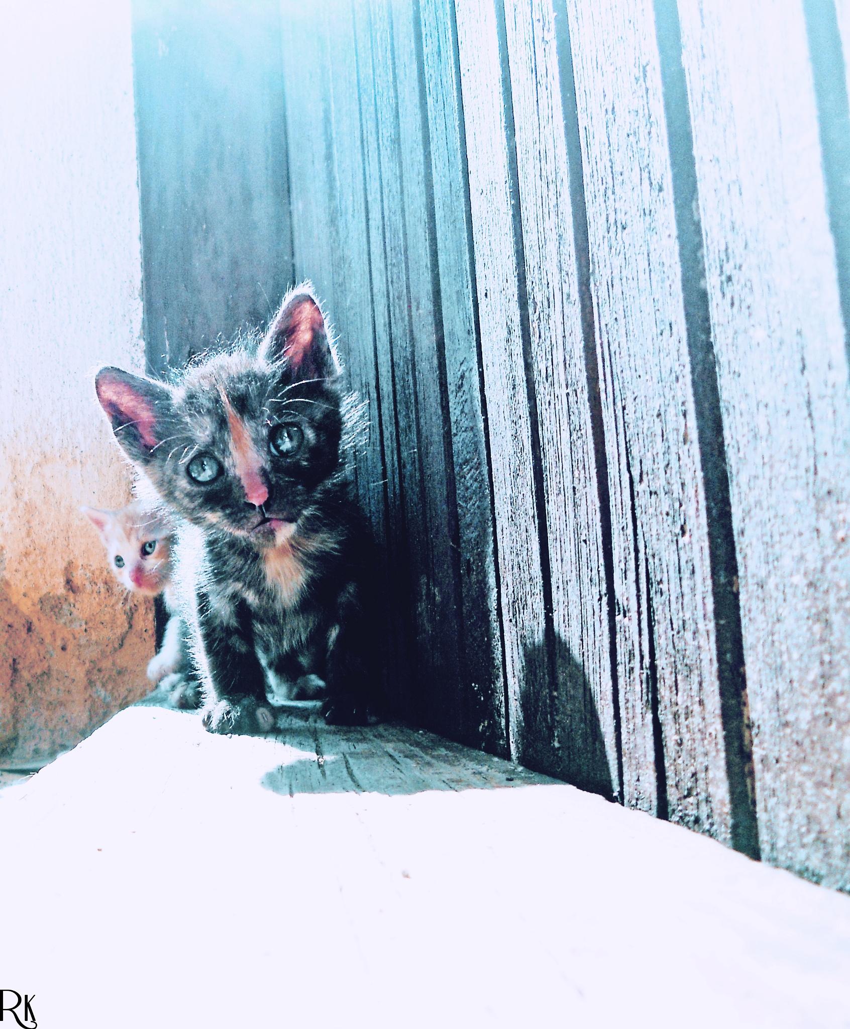 Black kitty @catsedition7 by Robert Krstevski