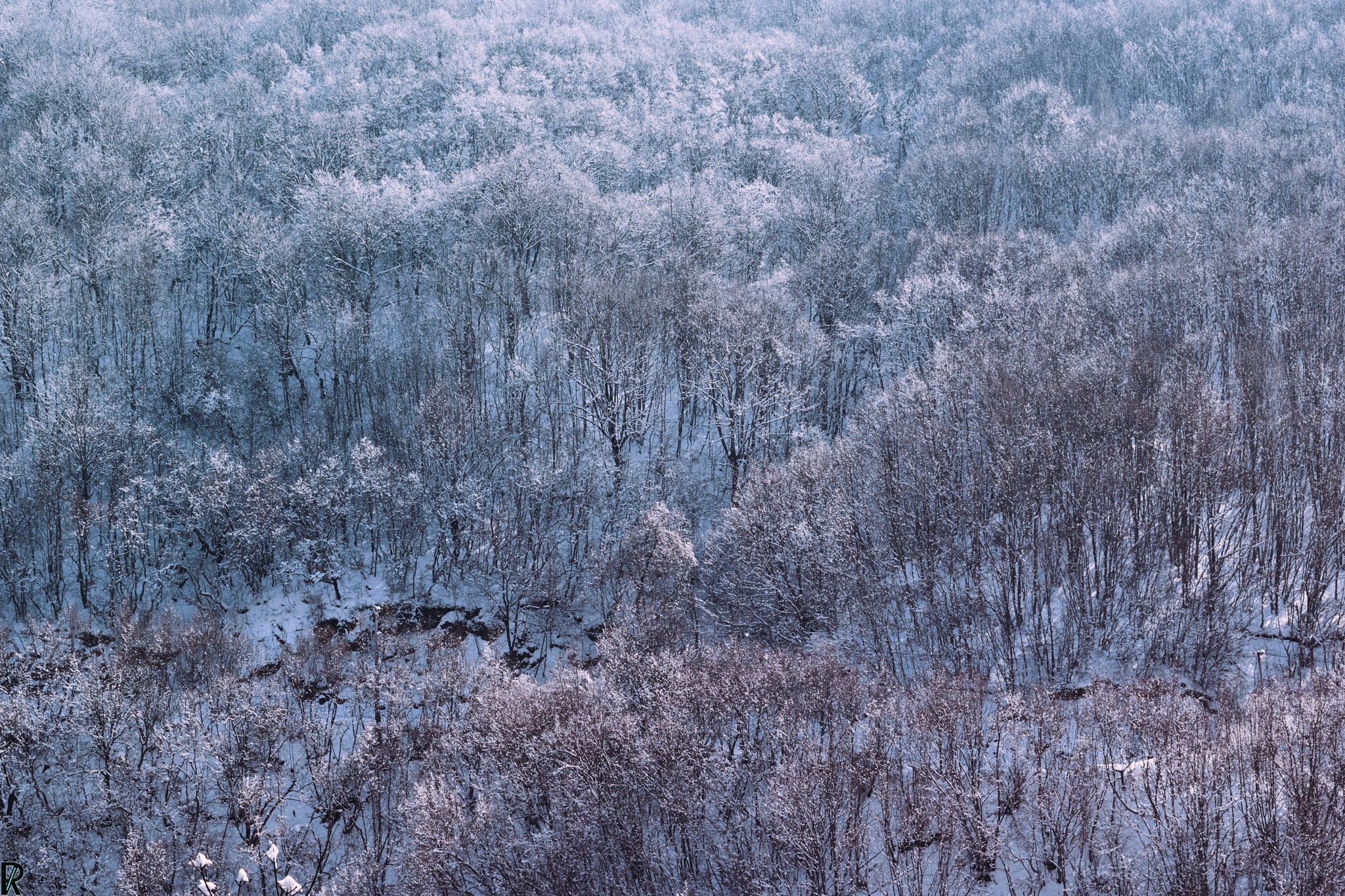 Winter in Kriva Palanka, Macedonia (11) by Robert Krstevski