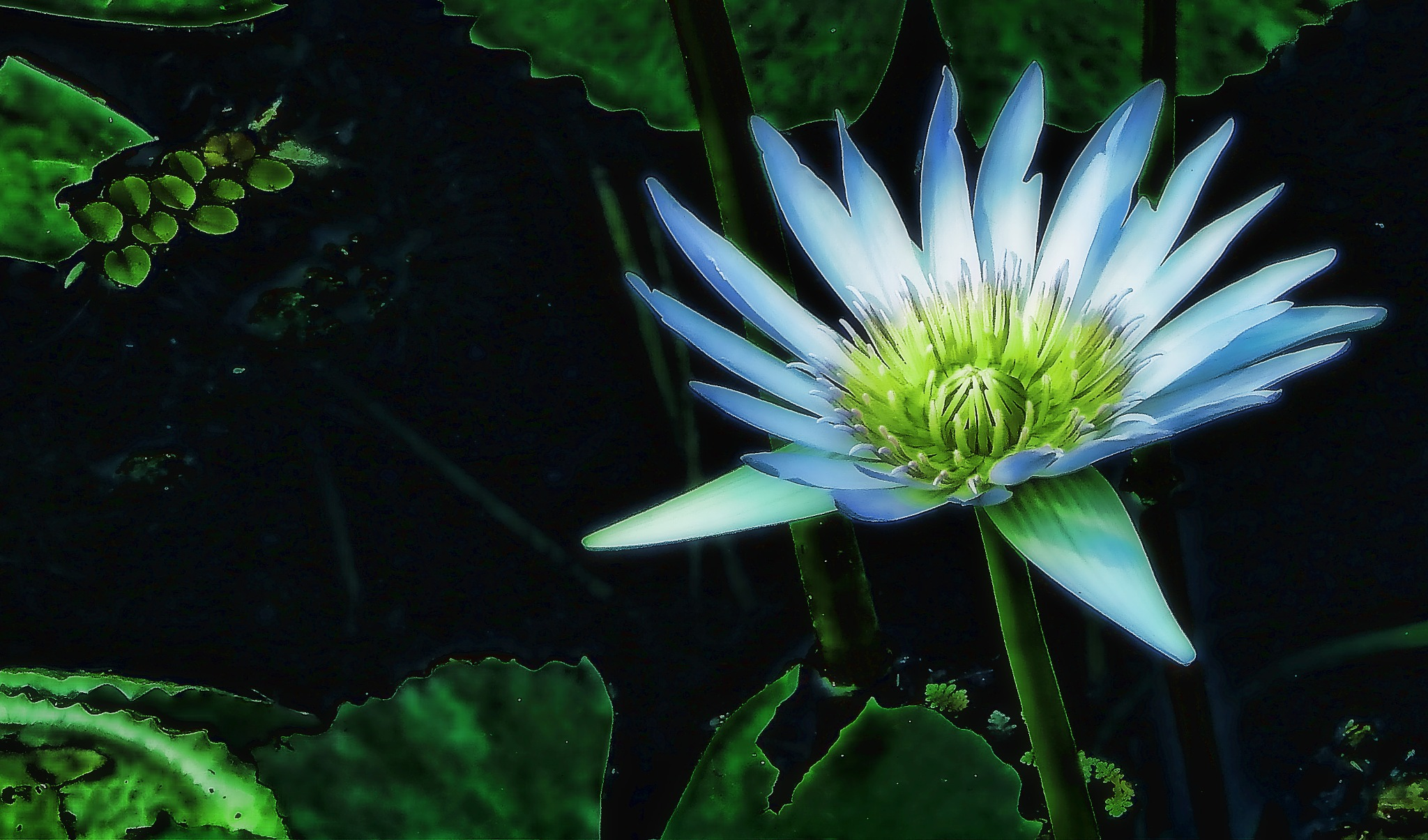 Lotus by DanicaD