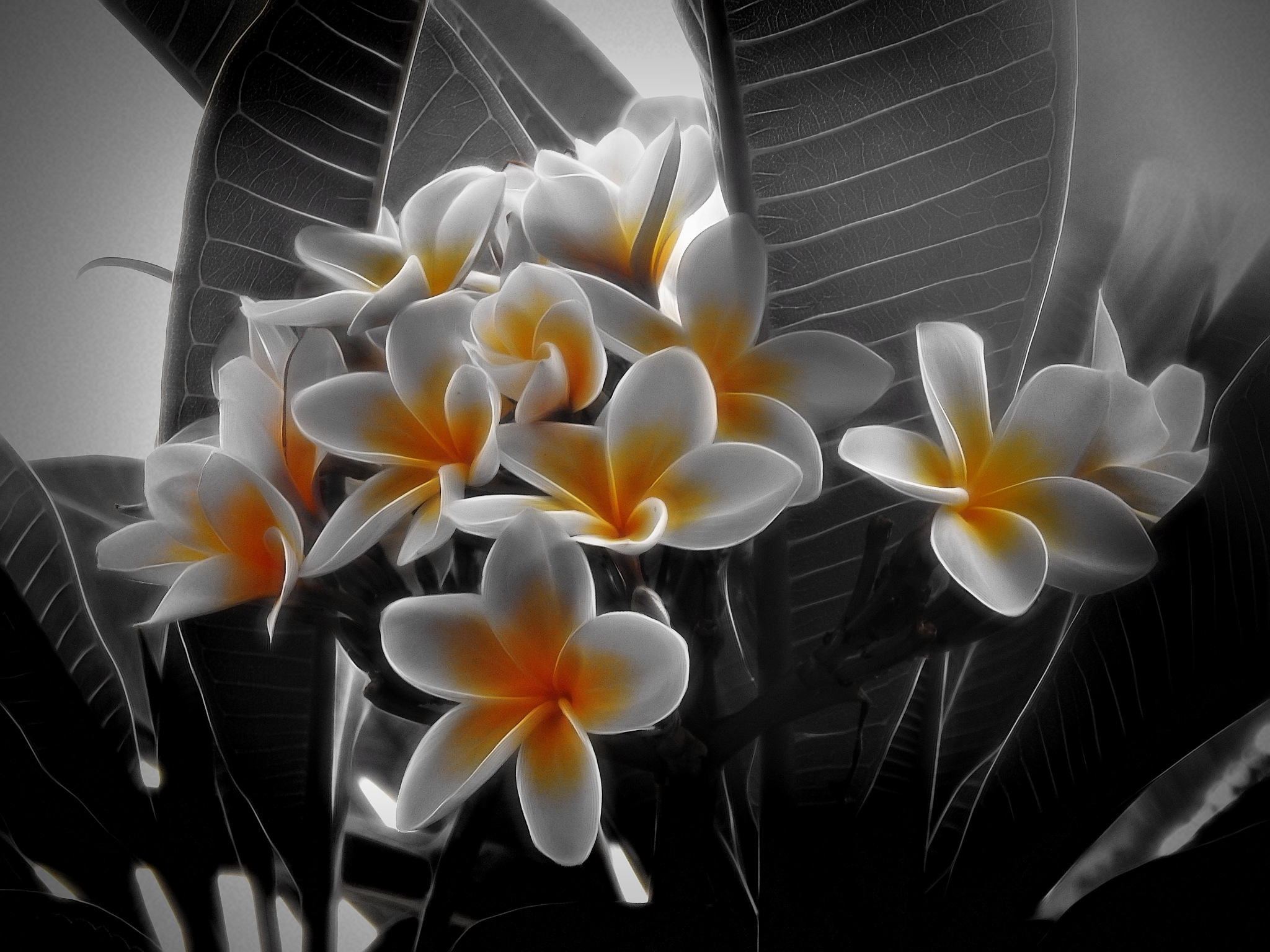 My garden by DanicaD