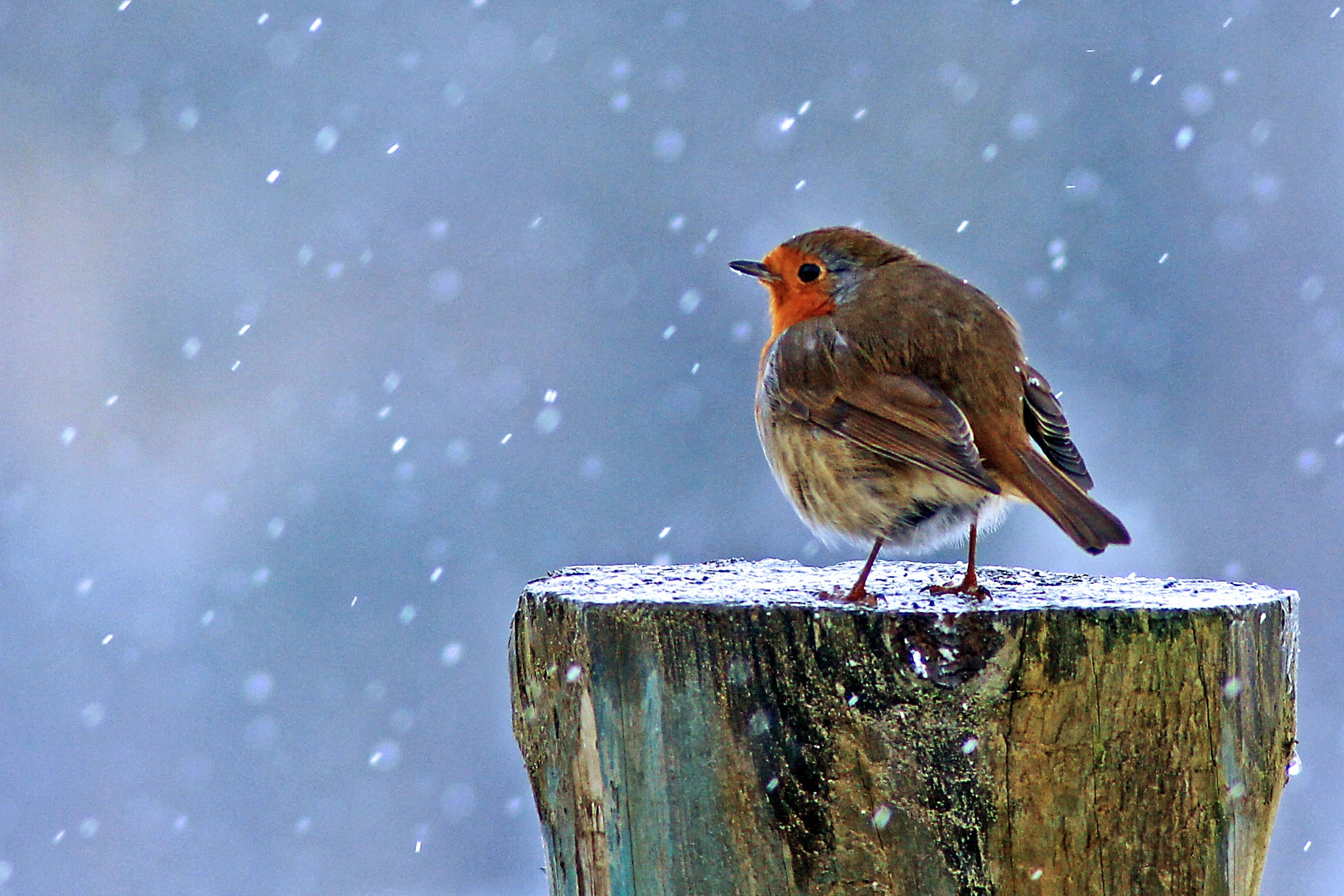 Merry Xmas...... by SimonBrownPhotography