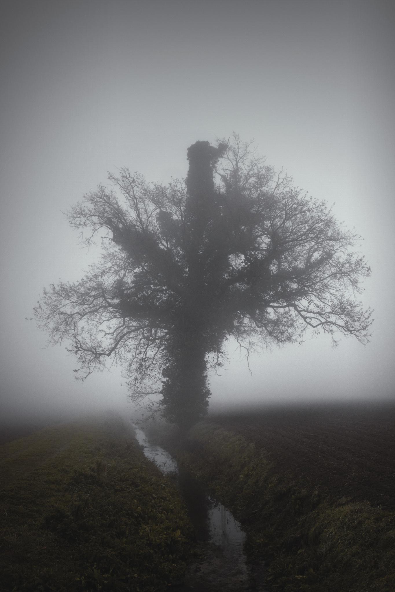 Misty Tree by Vasco Maverick Polenghi