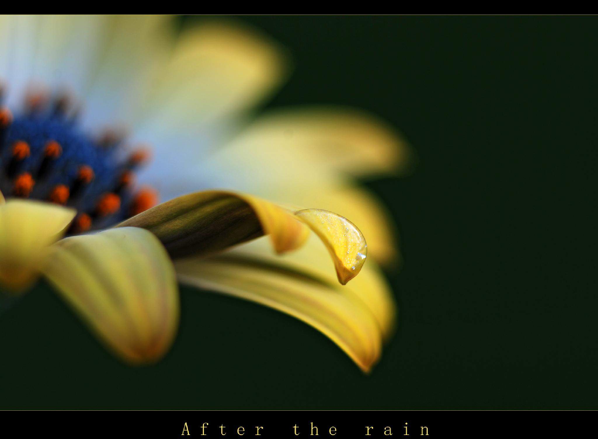 ~ After the rain ~  by NathalImage
