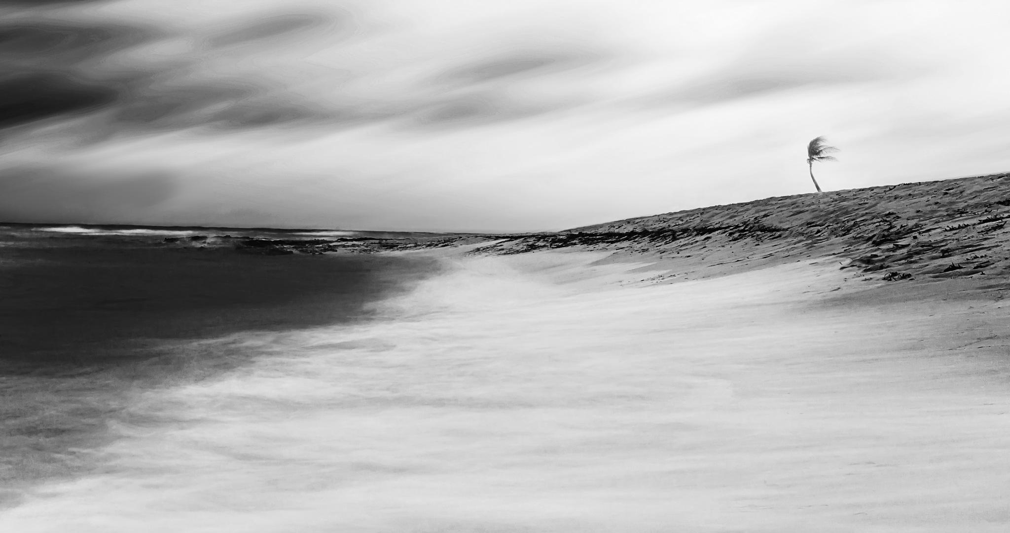 Untitled~ by Ahmed Shanab