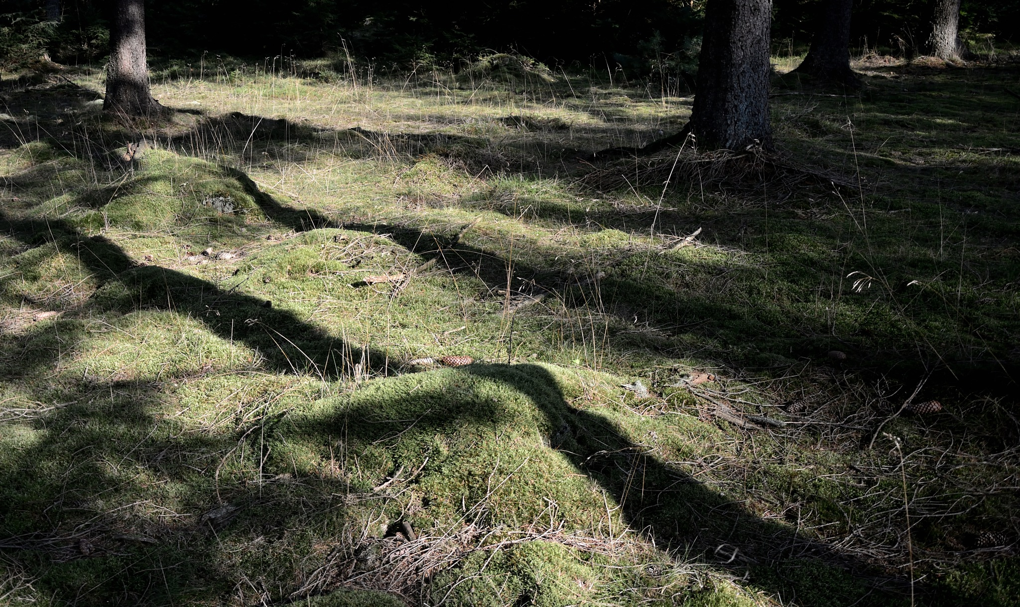 Photo in Landscape #shadows #forest