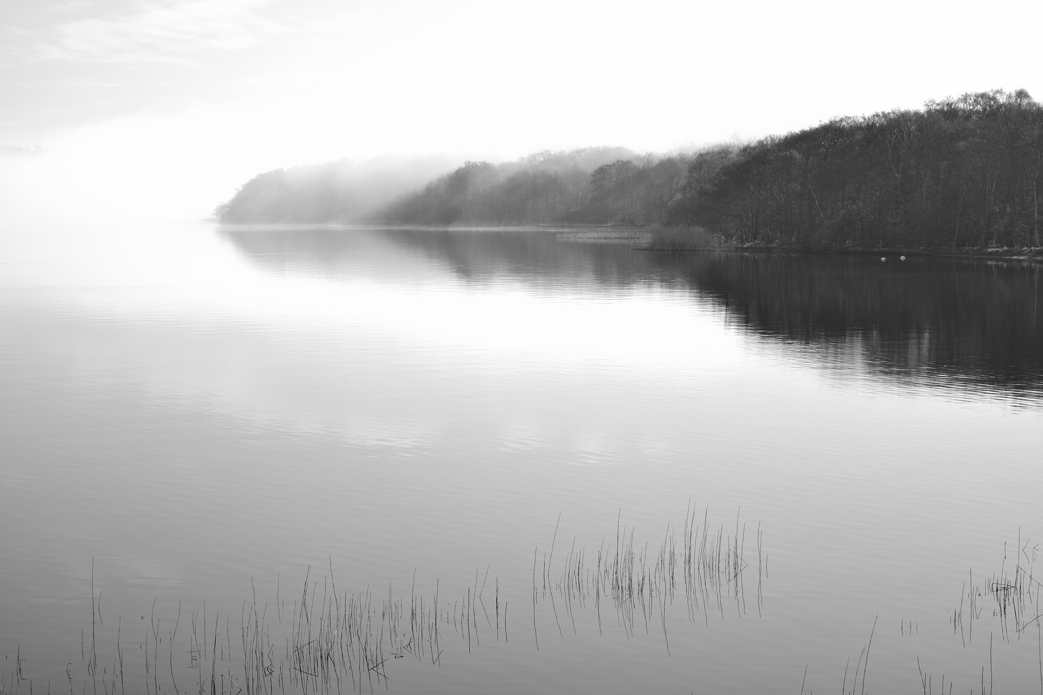 morning at the lake B&W by Poul-Erik Riis