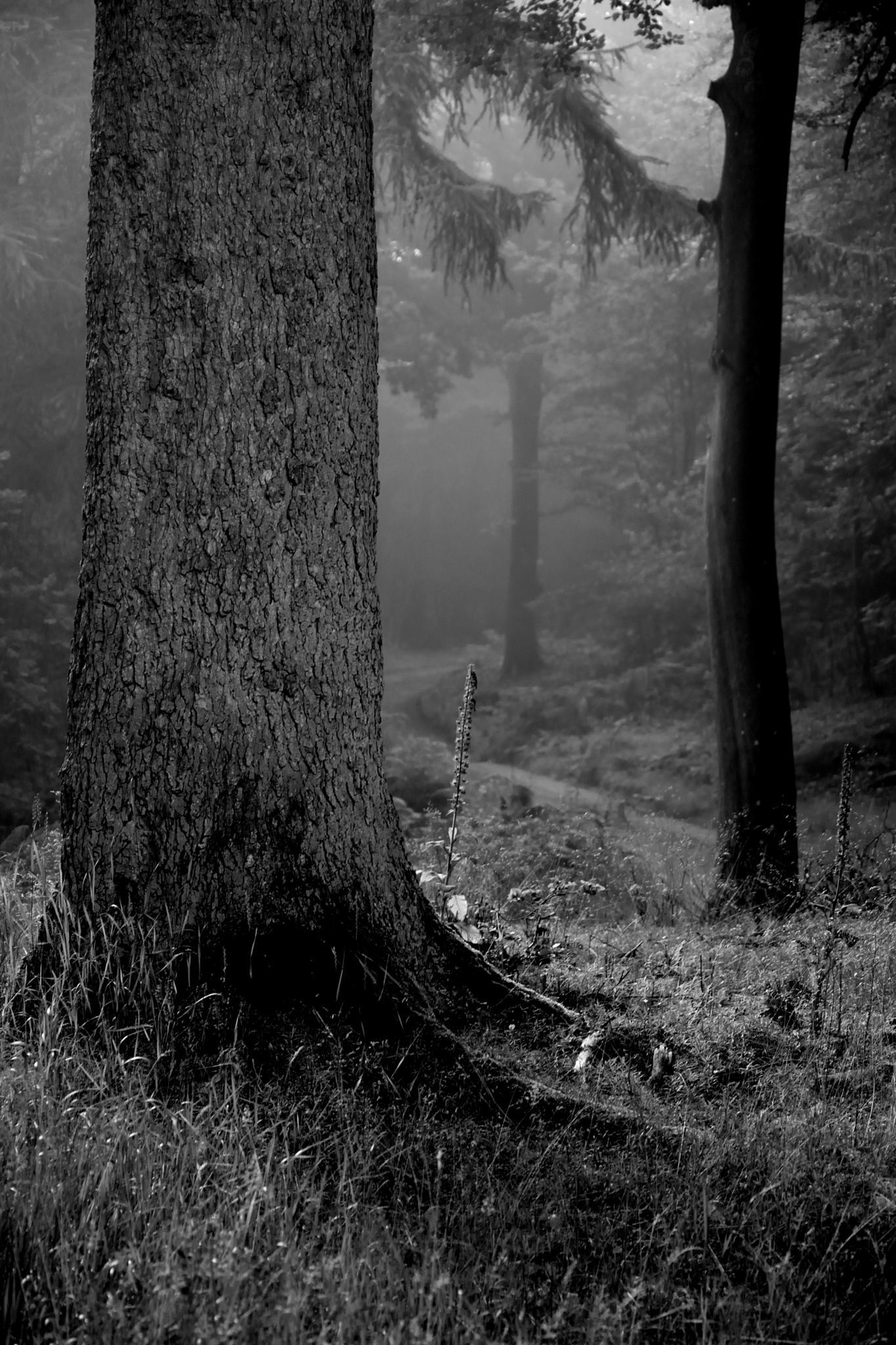 Morning Mist by Poul-Erik Riis