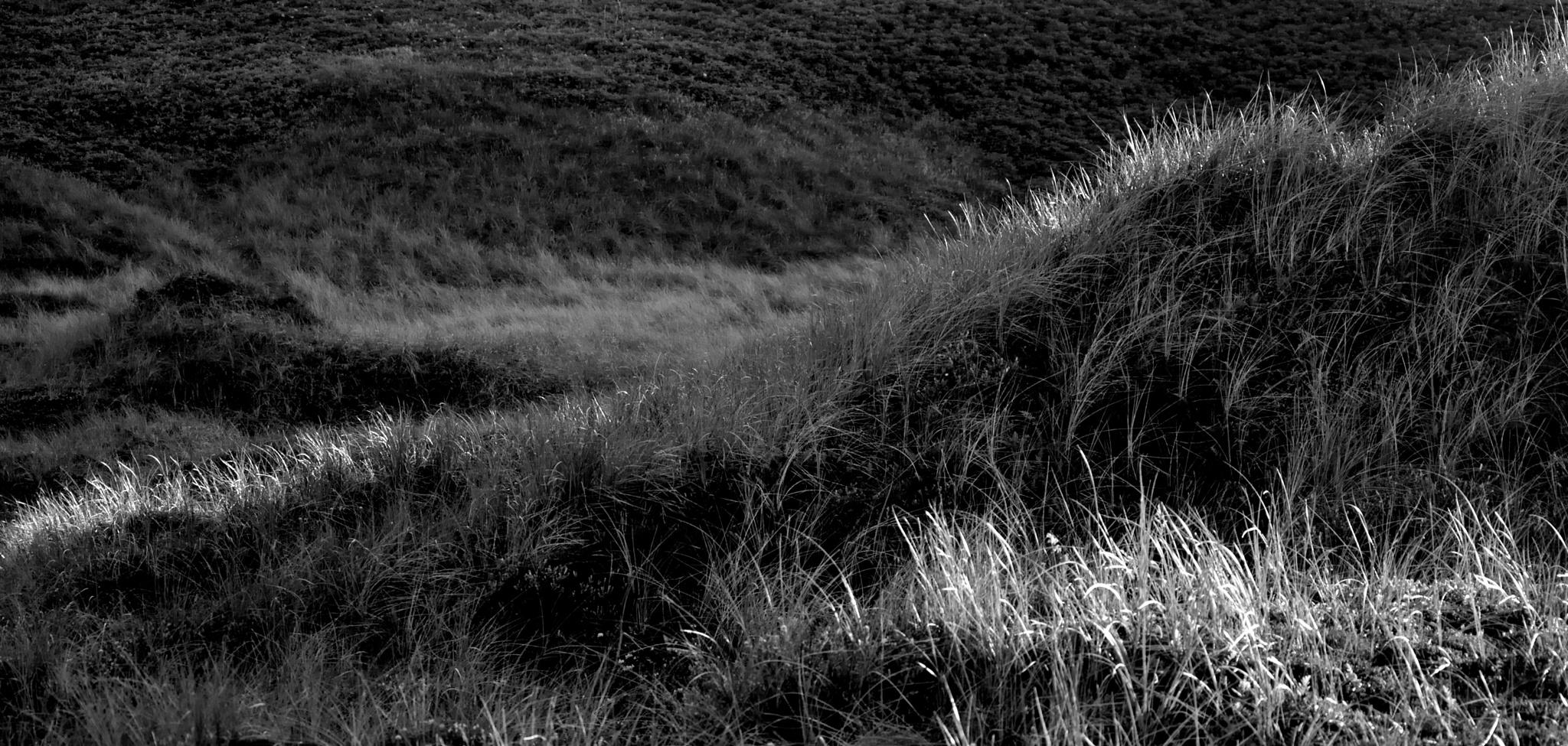 dunes by Poul-Erik Riis