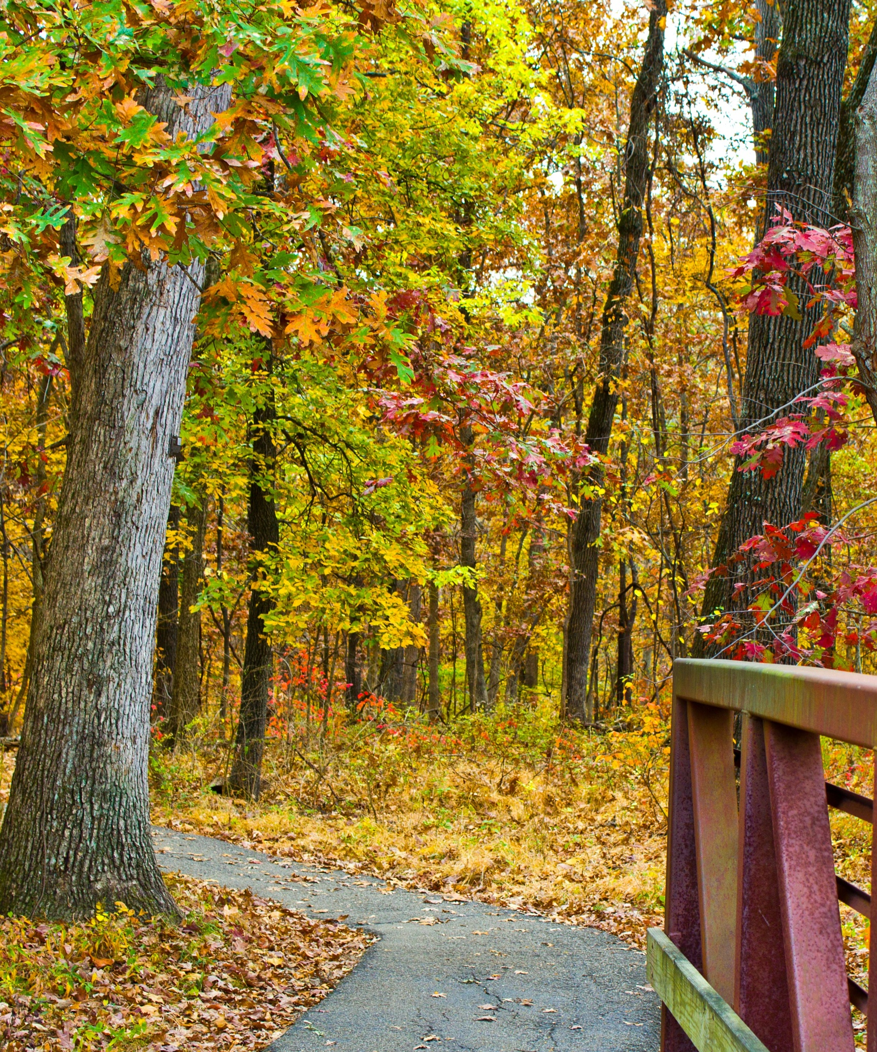 Powder Valley Hiking Trail by spalts