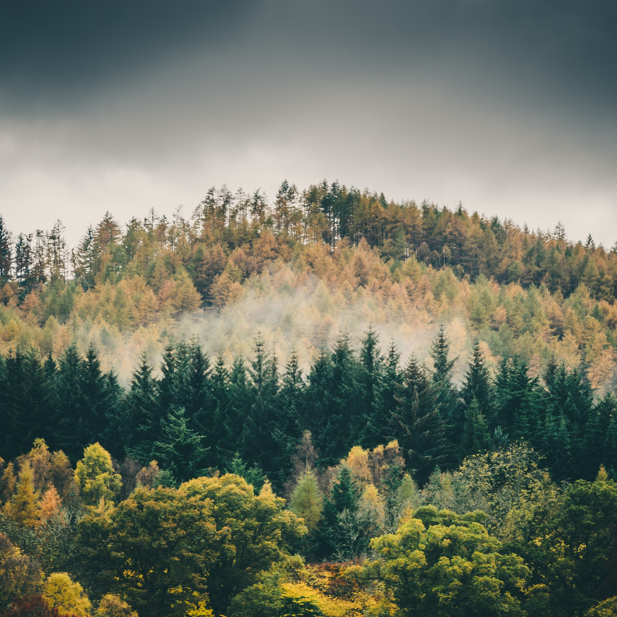 The Misty Pines by souravbhaduri