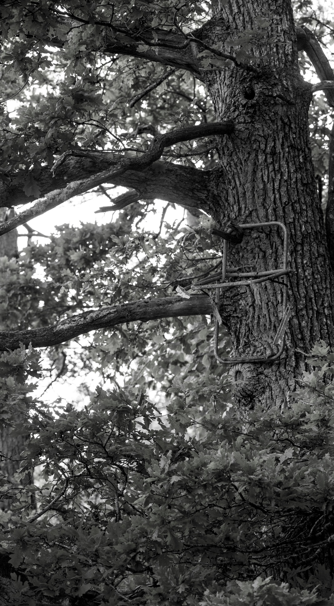 Tree Chair by Nicklas Sjoberg