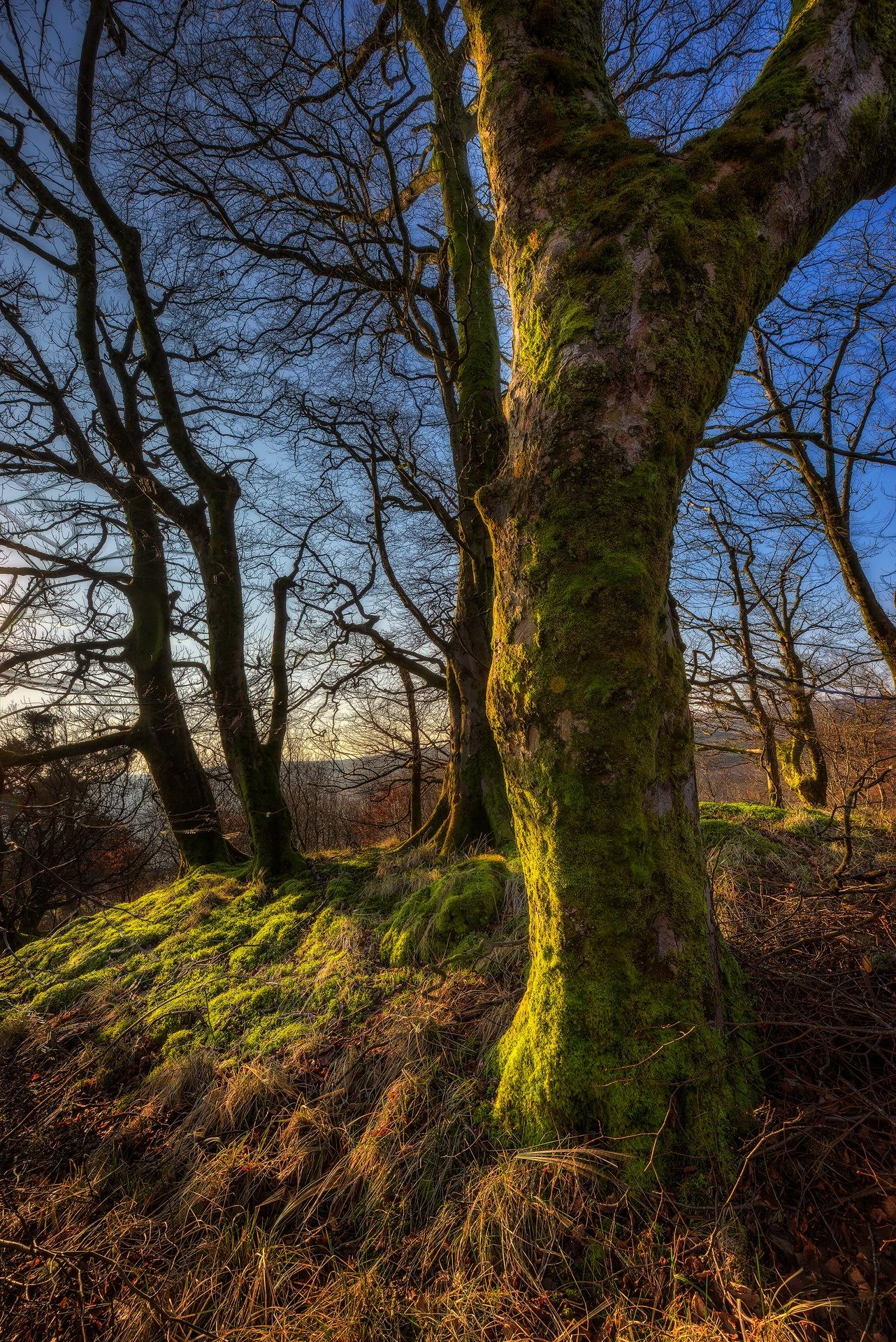 Woodland Light by Douglas Ritchie
