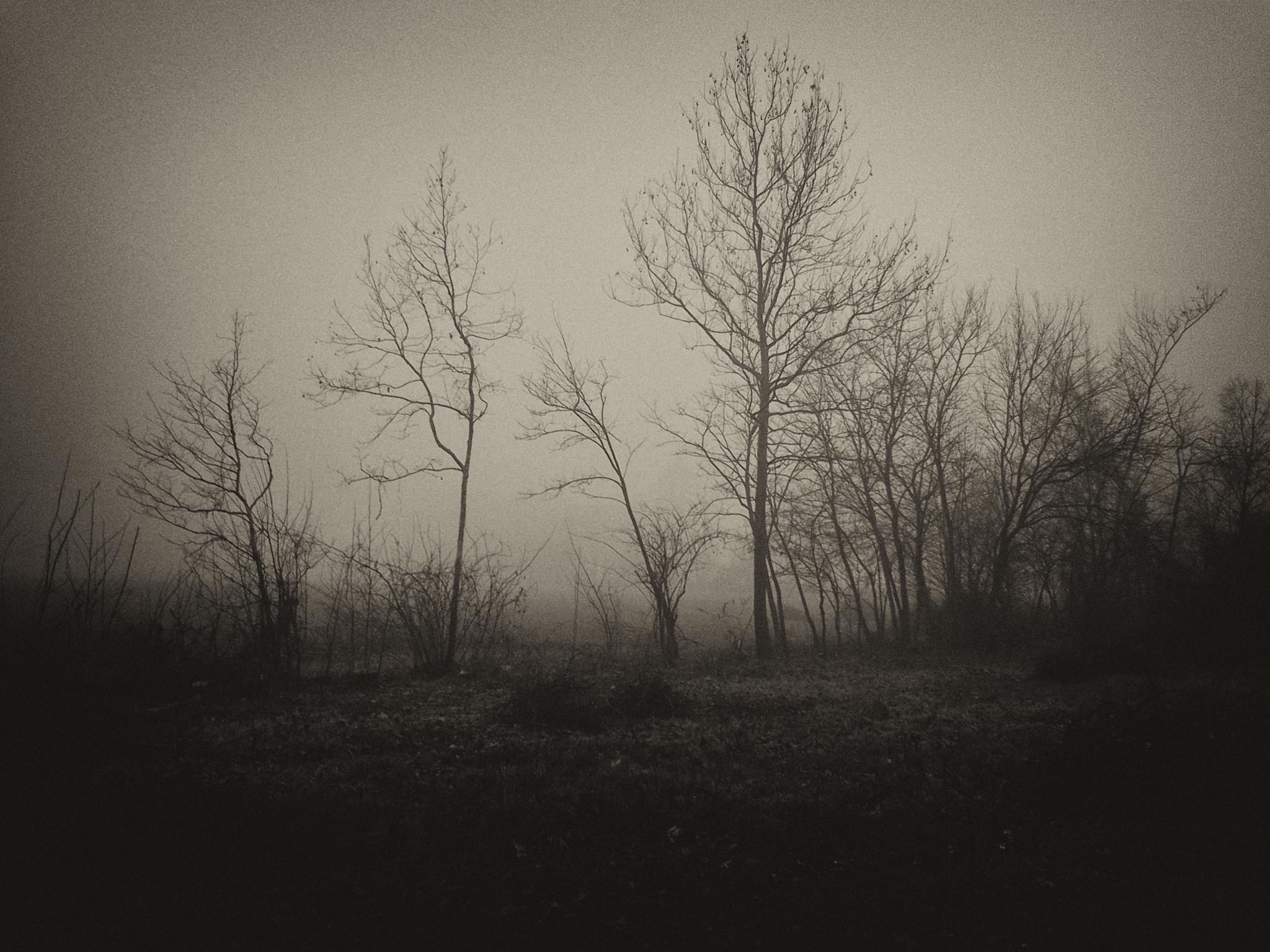 Solitude by Nazzareno Gritti