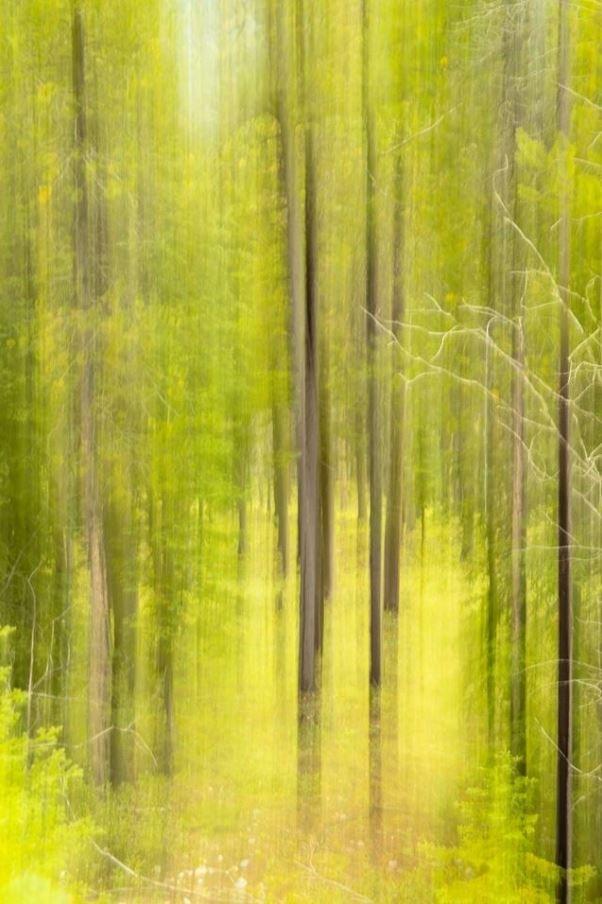 Tree Motion by Joe McDonald