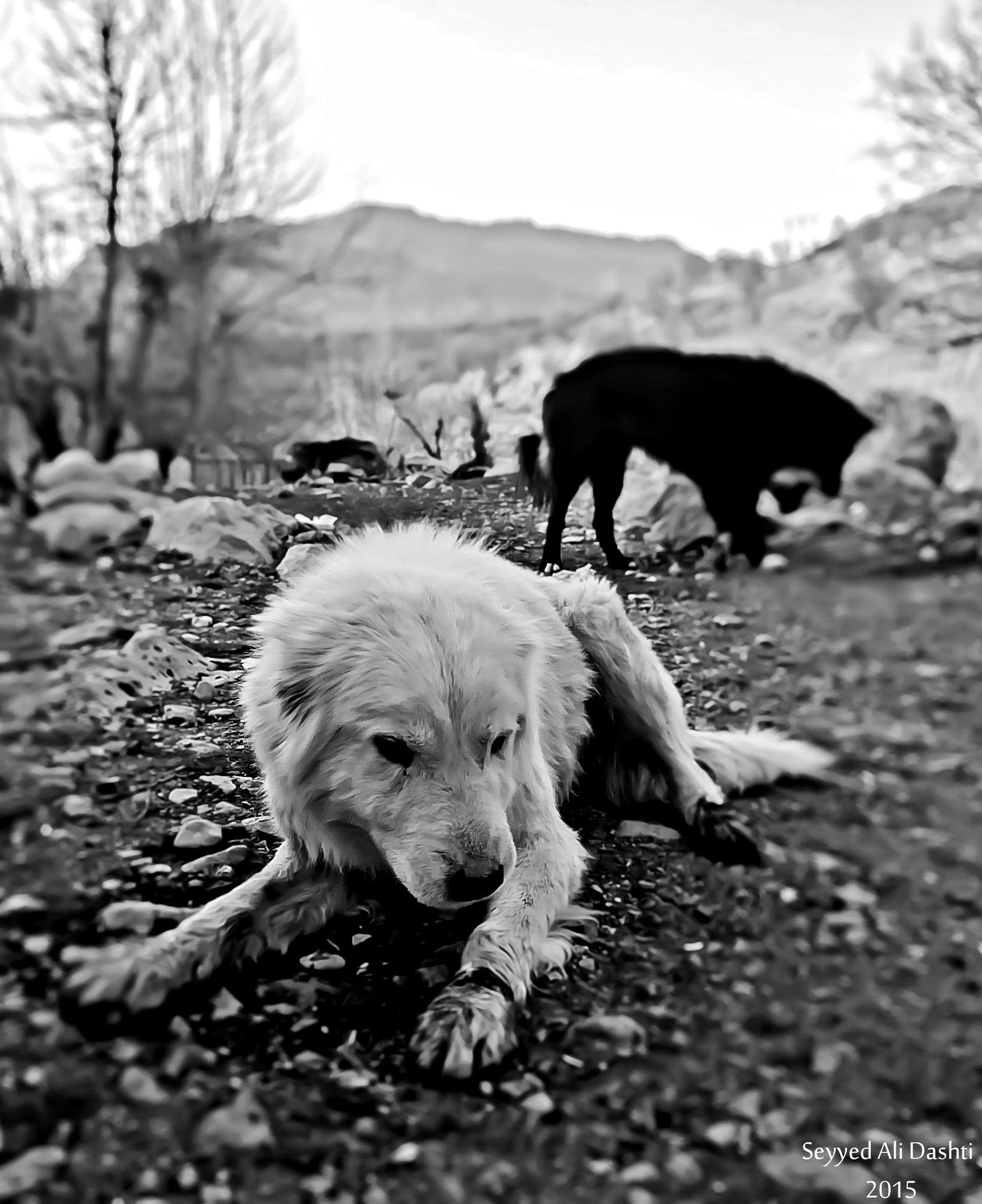 Dog (black and white) by Seyyed Ali Dashti