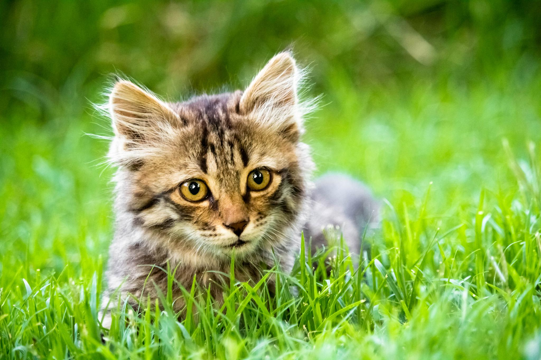 kitten lovely by Seyyed Ali Dashti