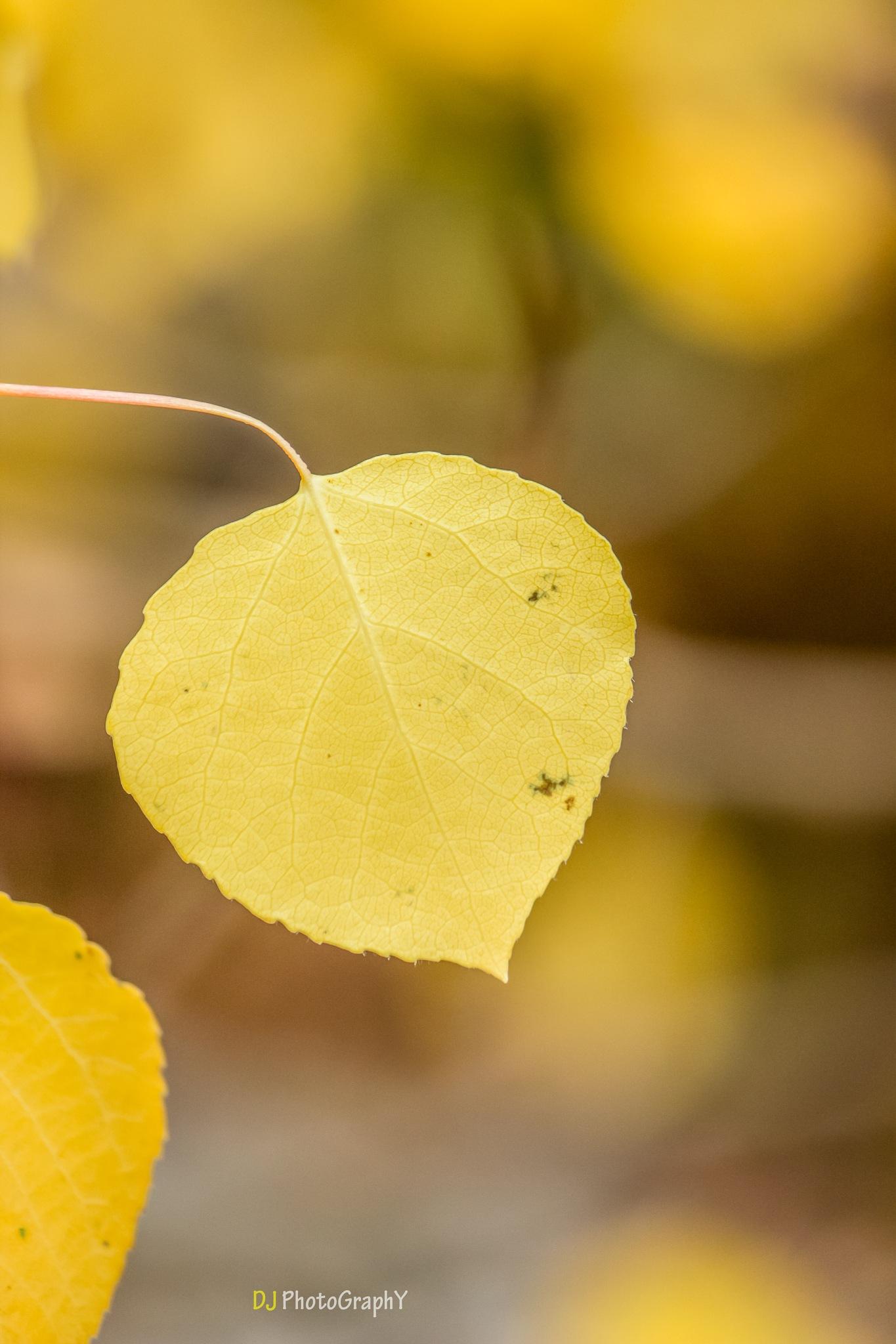 Fall by Dinesh kumar Jayapal