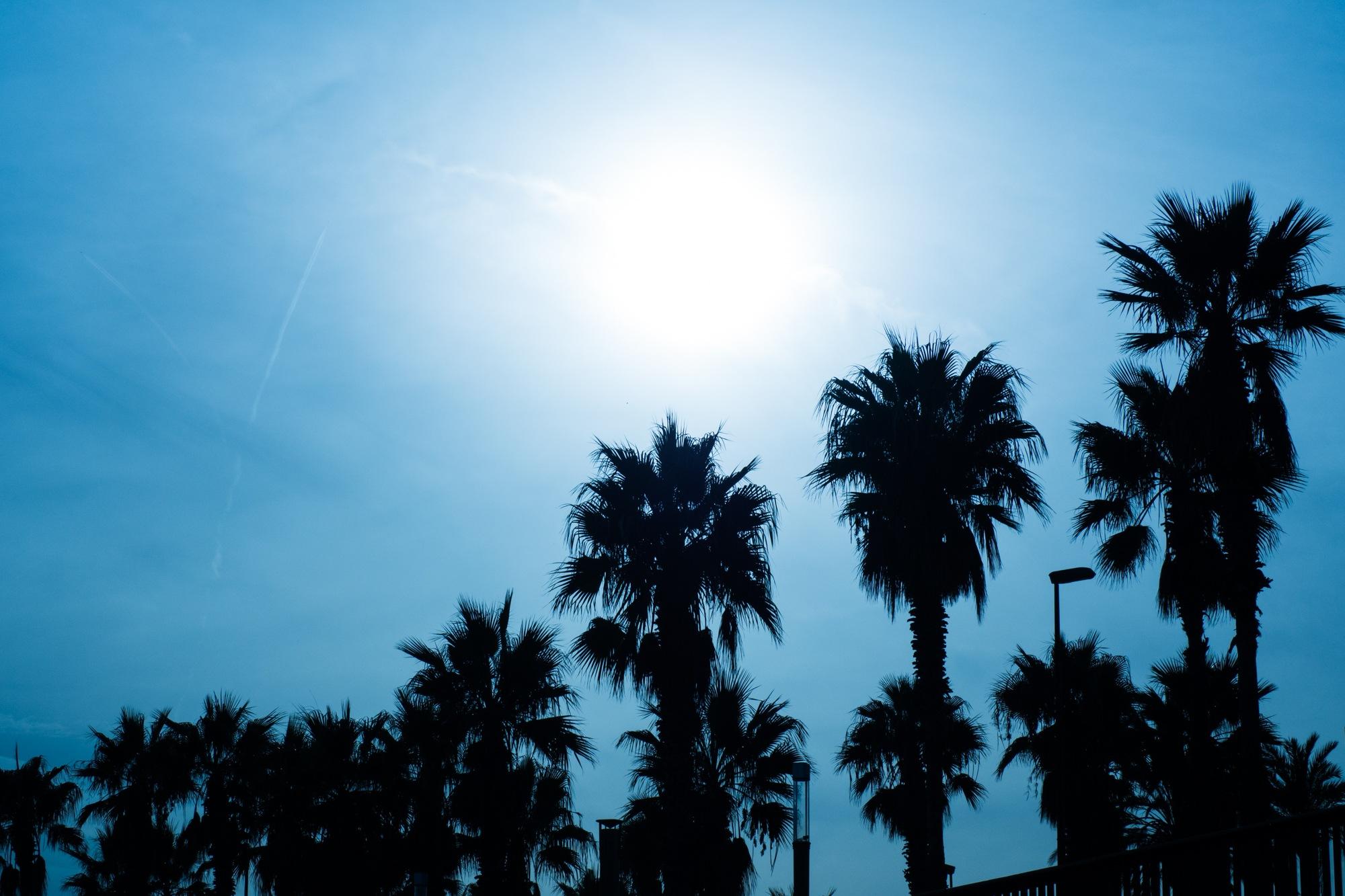 Sunny palm beach by DavidZisky