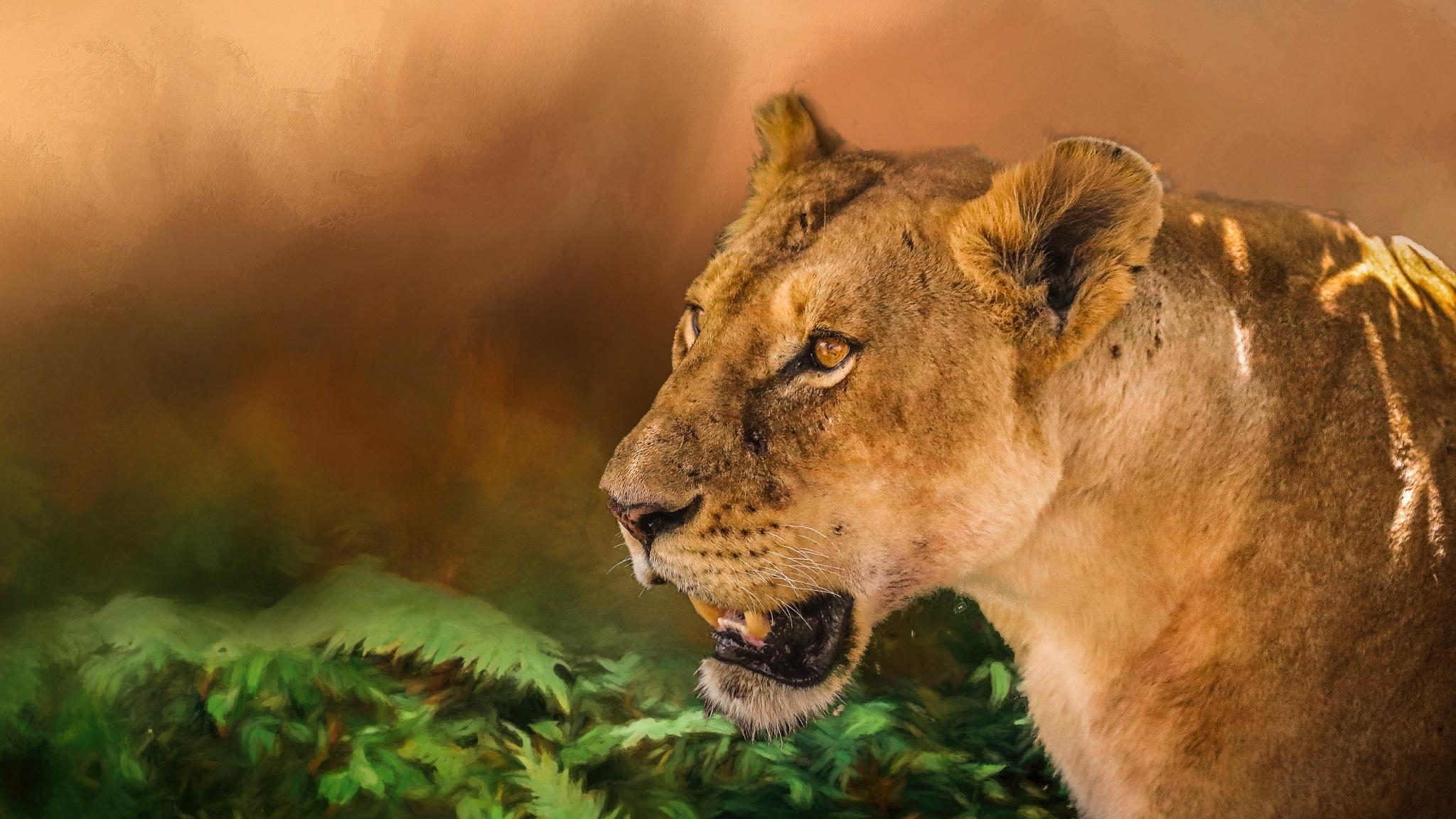 Masai Mara by Janaka