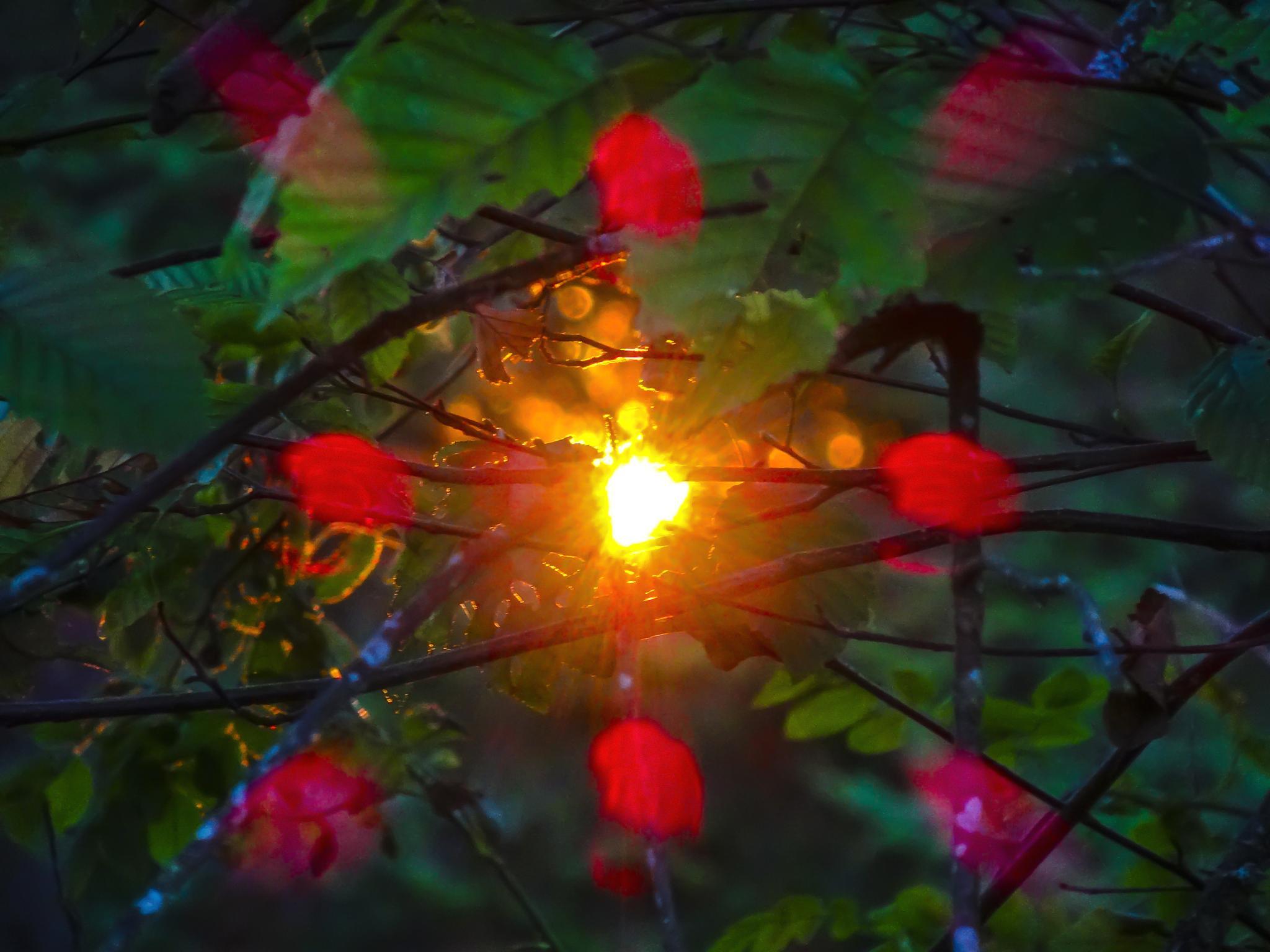Sunset by Raini Sicher
