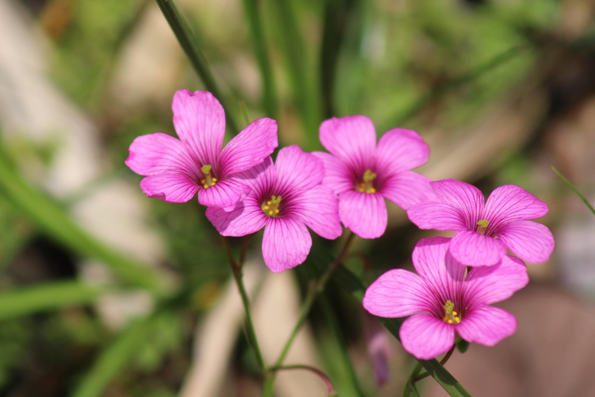 I fiori della sorgente by dovicchi